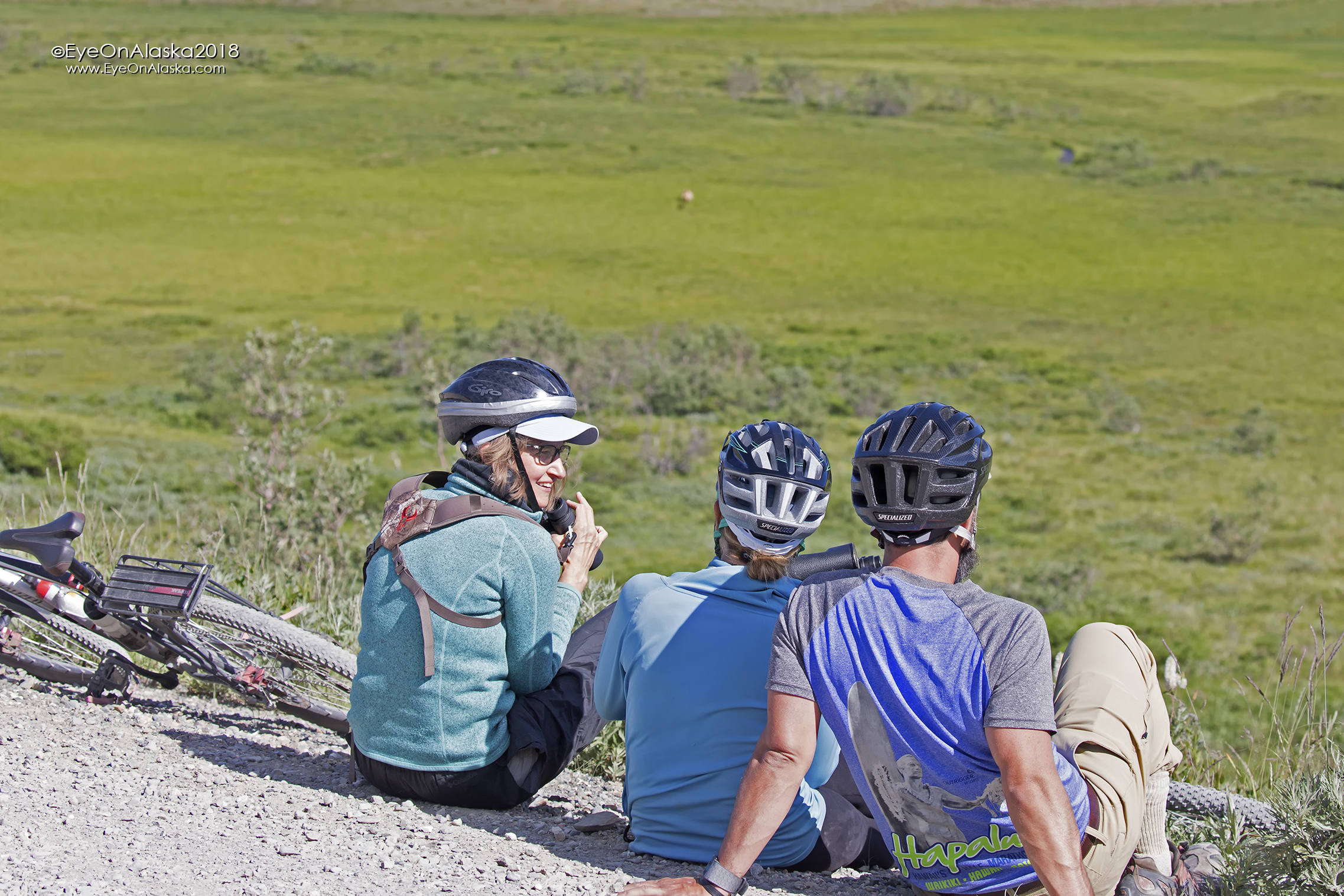 The shuttle bus couldn't stay for long, so we rode to Eielson Visitor Center and then biked back to a spot well above the bears to watch them for a long time. The cubs were really playful.
