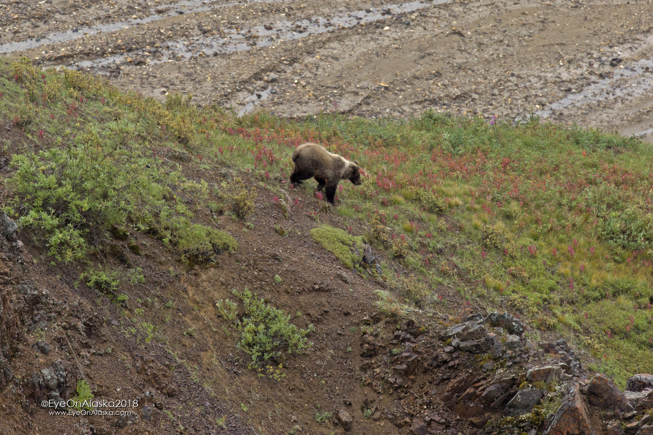 Spotted this probably 2 year old cub just below us at Marmot Rock.