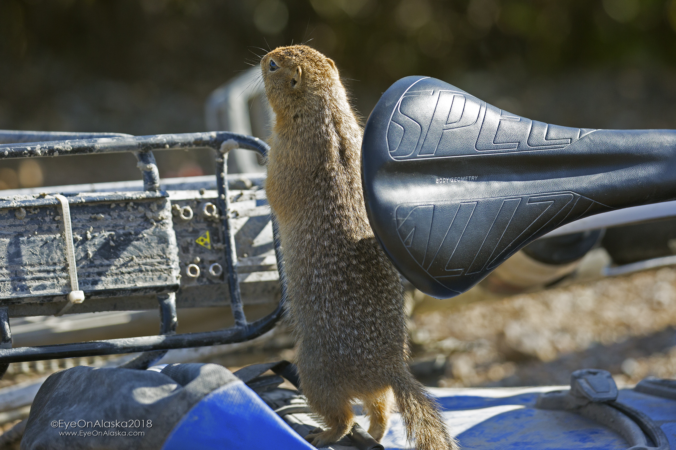 I think he wanted a ride down Igloo Canyon.