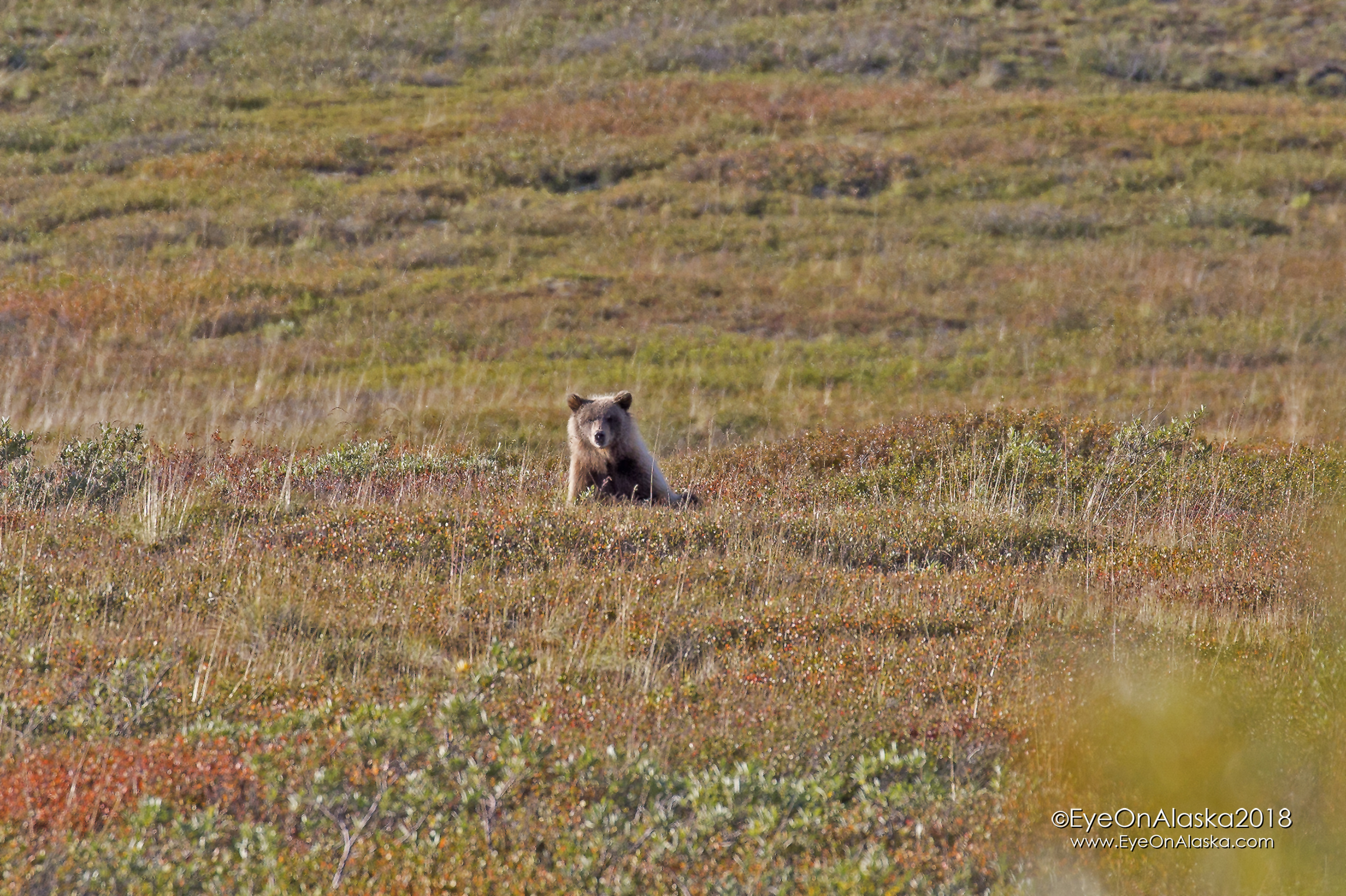 Our friends joined us with their bikes and we headed towards Igloo Canyon and the campground.  Not more than 200 yards down the road I looked up just as this cub popped up out of the berry patch!  He was no more than 100 yards from us.  Way too close!