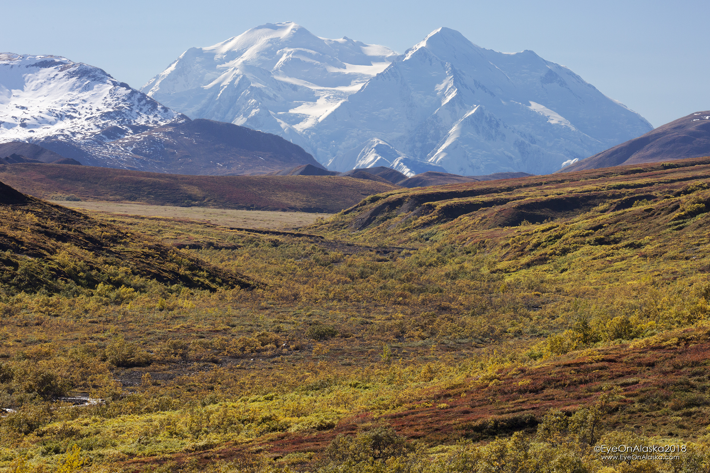 Back on the bike riding from the top of Highway Pass back to the Toklat River.  Looking back towards Denali.