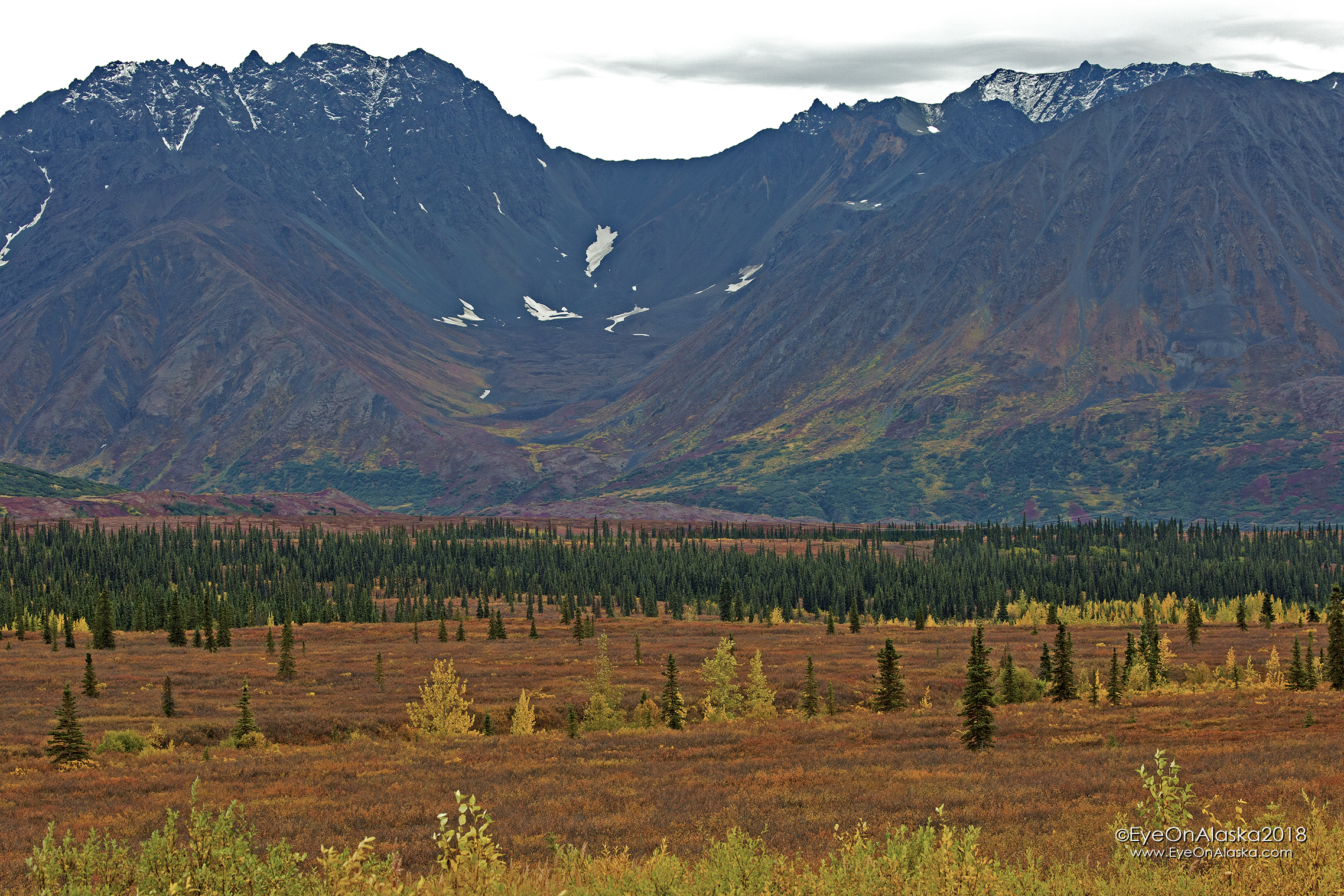 The colors in Broad Pass just keep getting more vibrant on the drive up.  If Denali Park is like this, it's going to be a great weekend.