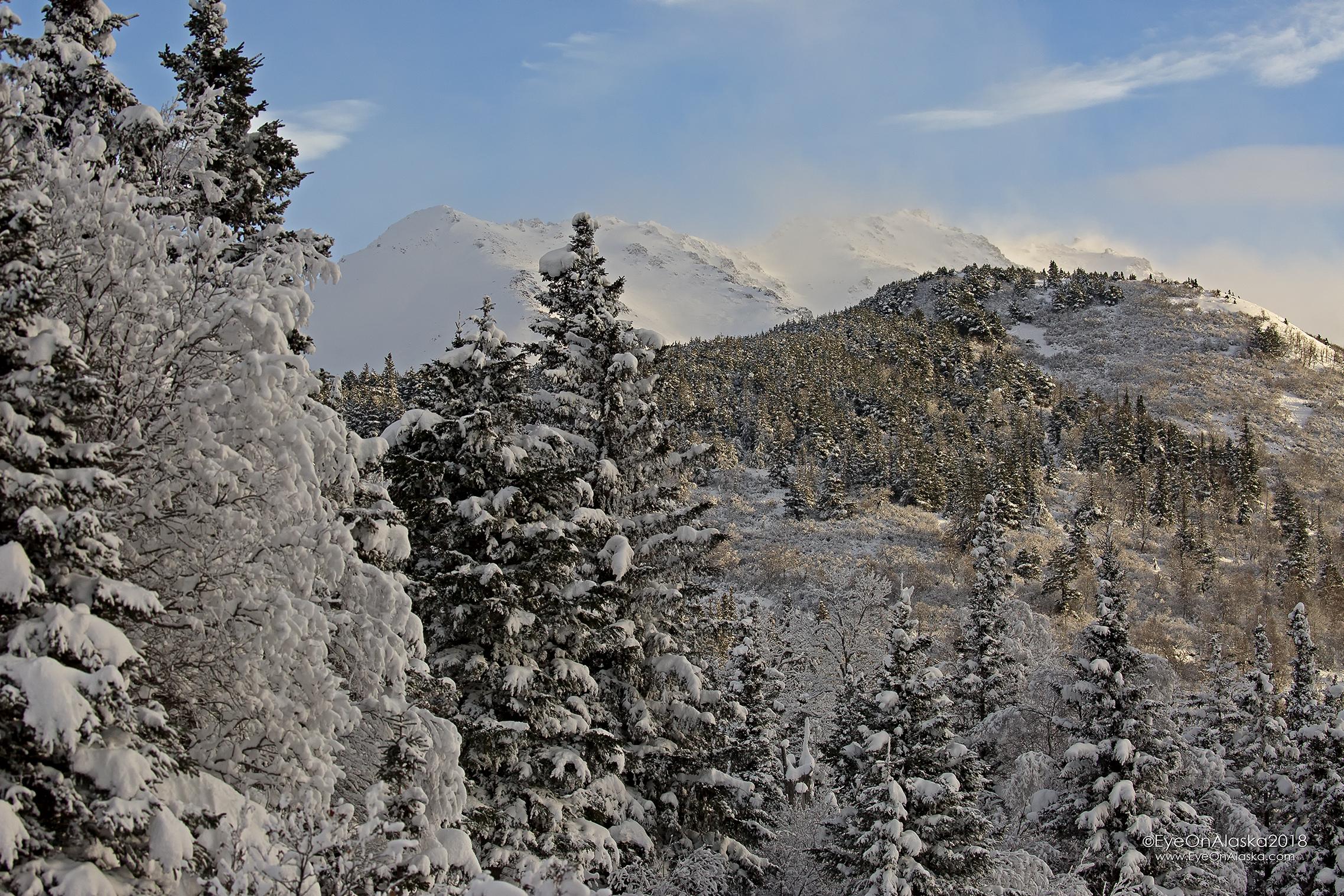 Snow draped Bear Valley.