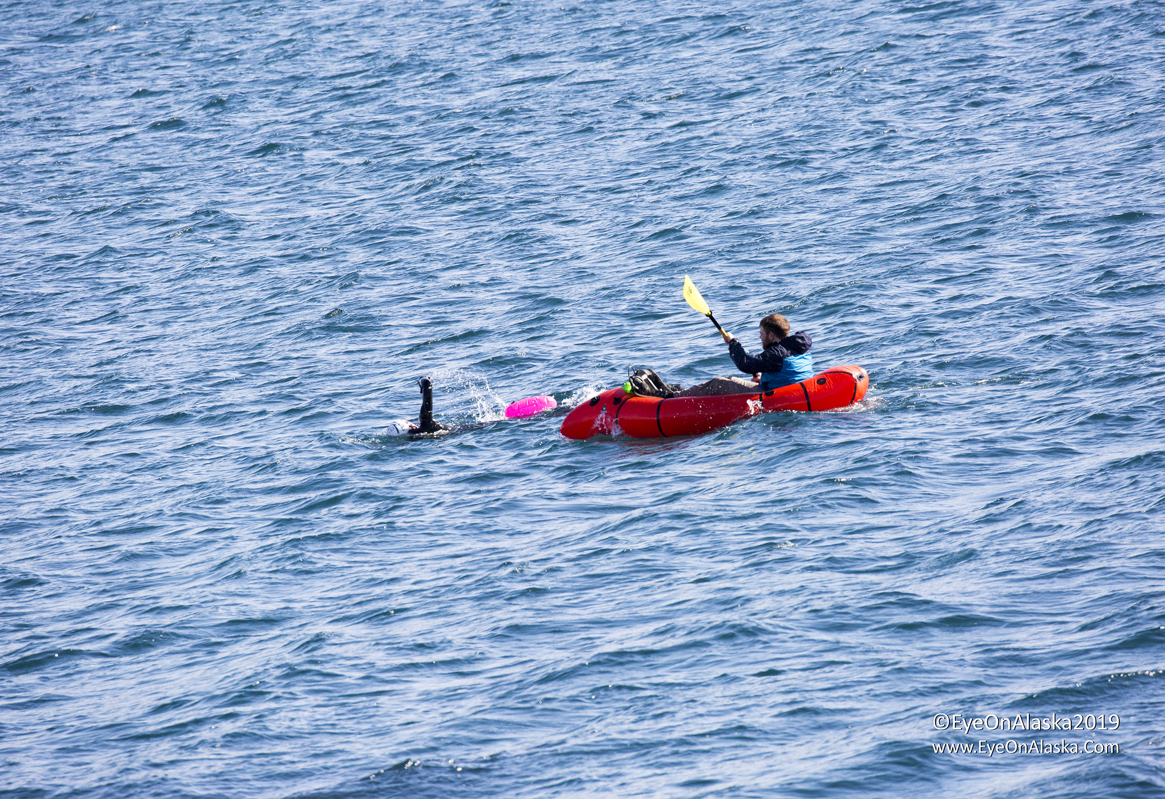 Just another completely normal Alaskan swimming in Resurrection Bay in March training for a Triathlon.