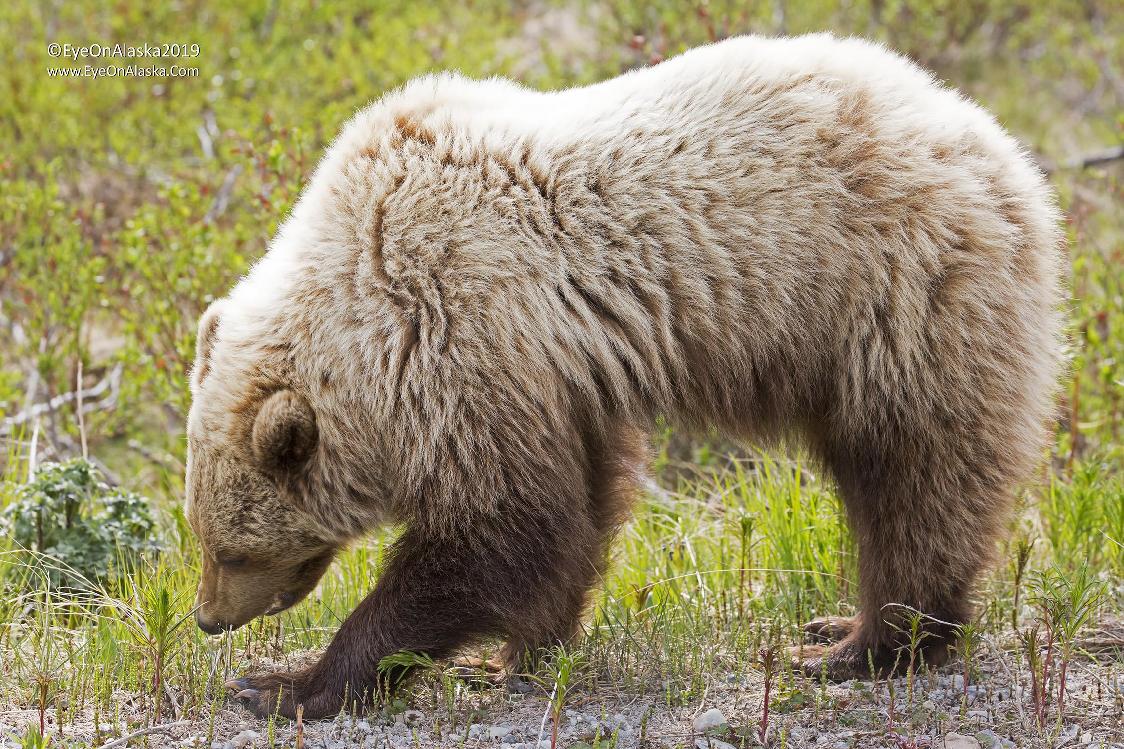 Momma bear.