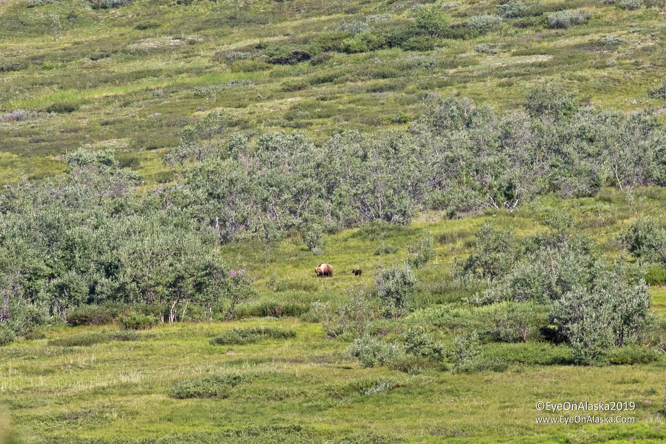 And there's mama bear and spring cubs again in almost the same spot as yesterday.  We sat and watched them for quite awhile.