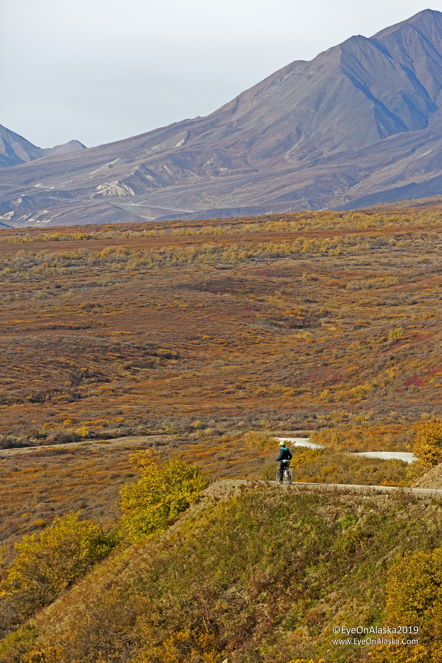 We biked from Polychrome Pass to the Toklat River.  The scenery was like this the entire way.