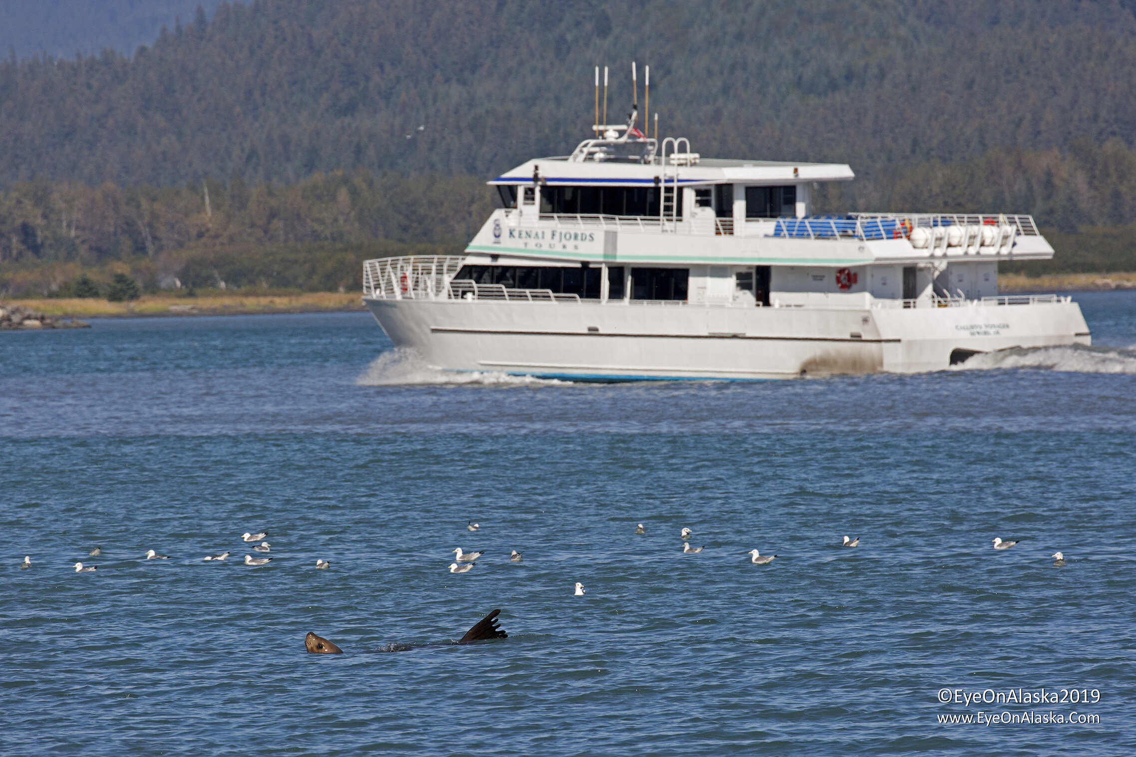 Waving at one of the Kenai Fjords tour boats that's heading back into the harbor.