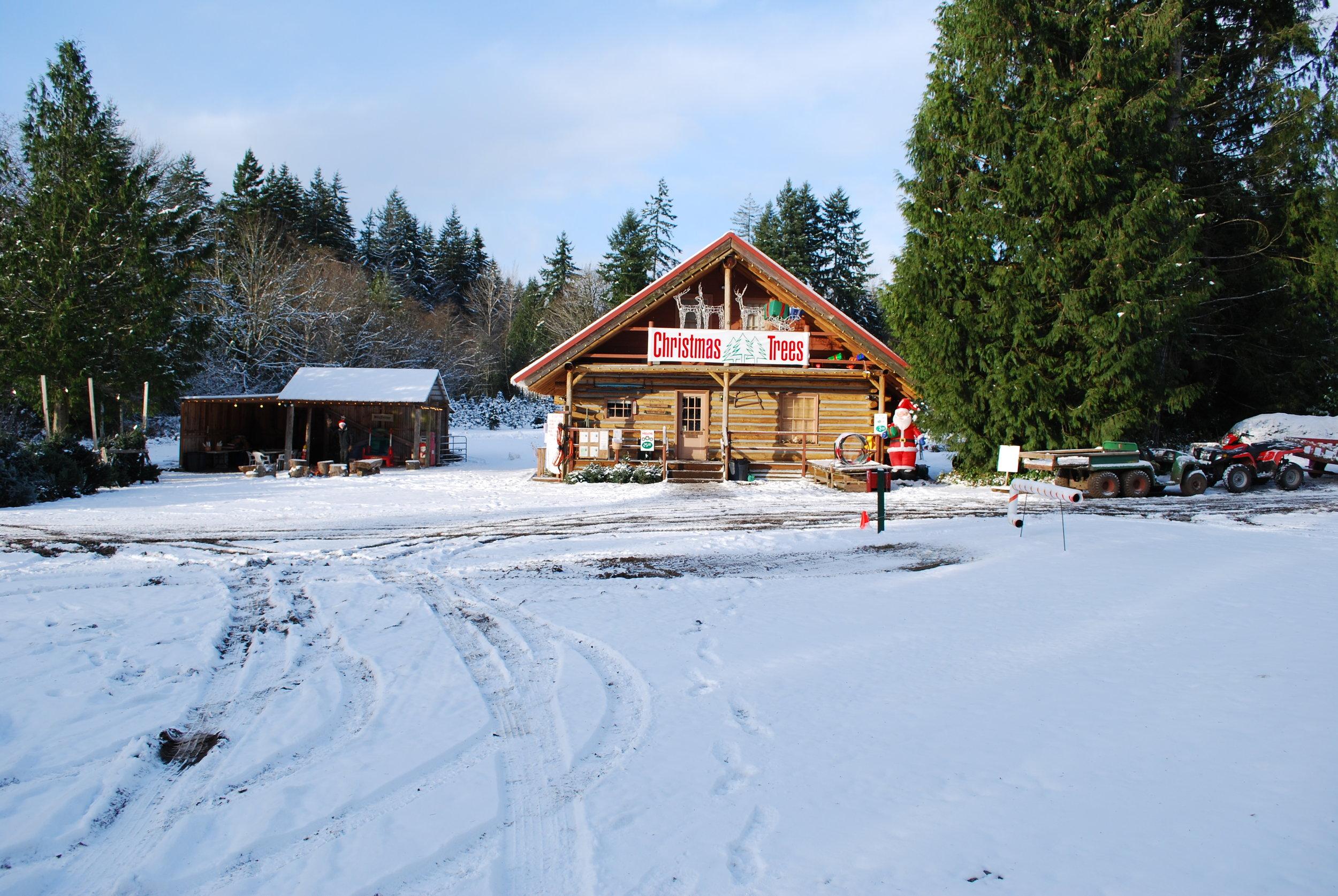 Christmas tree farm 2008 061.jpg