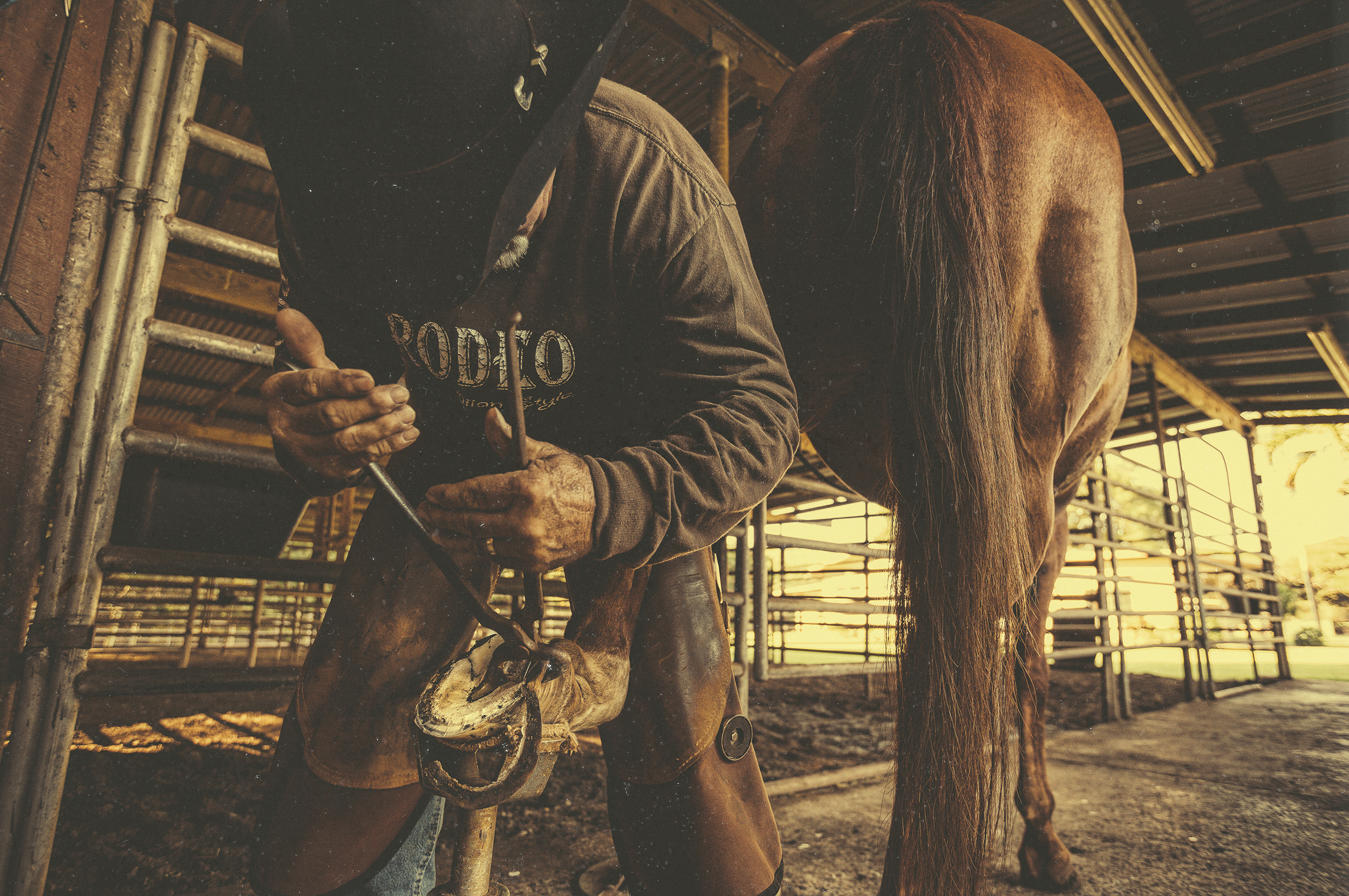 Joey Lorenzo uses his expert foot care of 35 years on all of the ranch's horses.