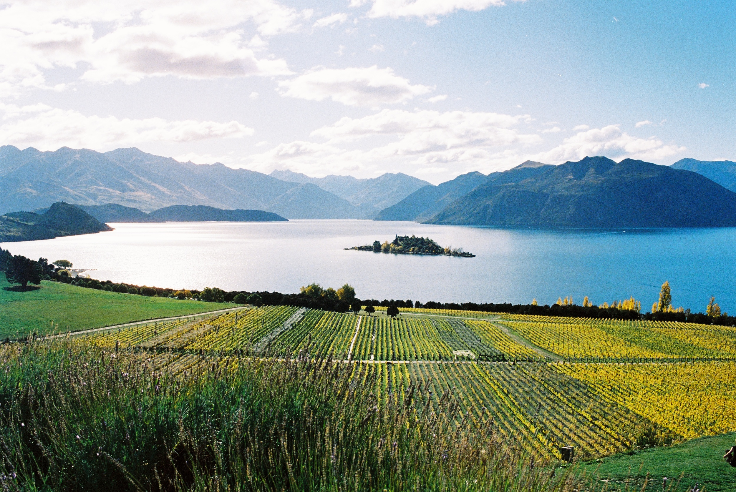 The view from Rippon Winery at Lake Wanaka