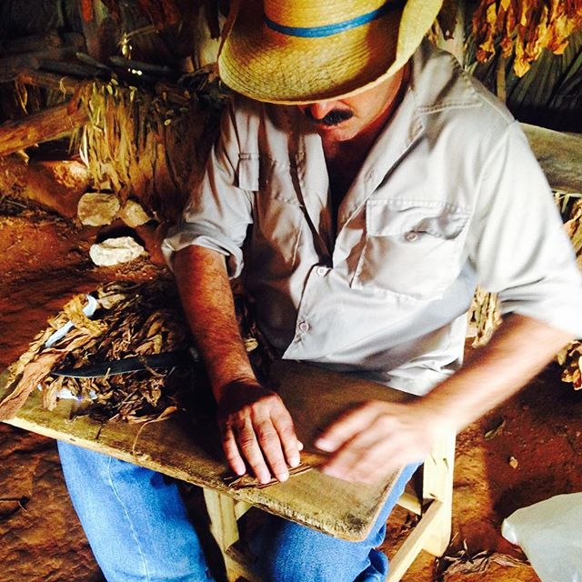 Touring a tobacco farm and getting lessons from a master Torcedor 👨‍🌾. . . . This is Benito, showing us the mesmerizing art of rolling in the drying hut of his organic tobacco plantation, nestled in the tiny agricultural town of Viñales. His plantation provides much of the tobacco used in the Cuban cigar industry! 🇨🇺