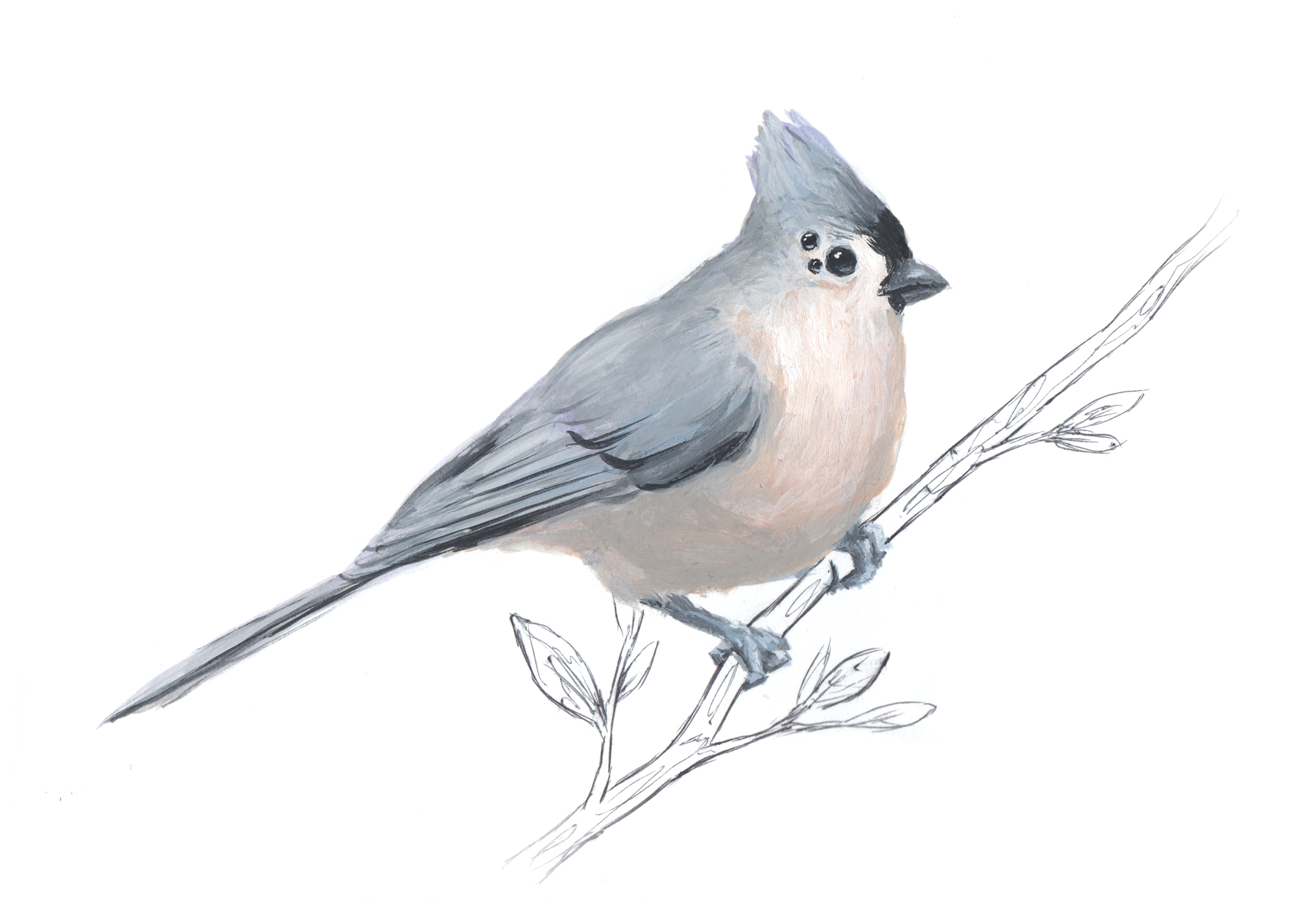 TitMouse-Bird4.jpg