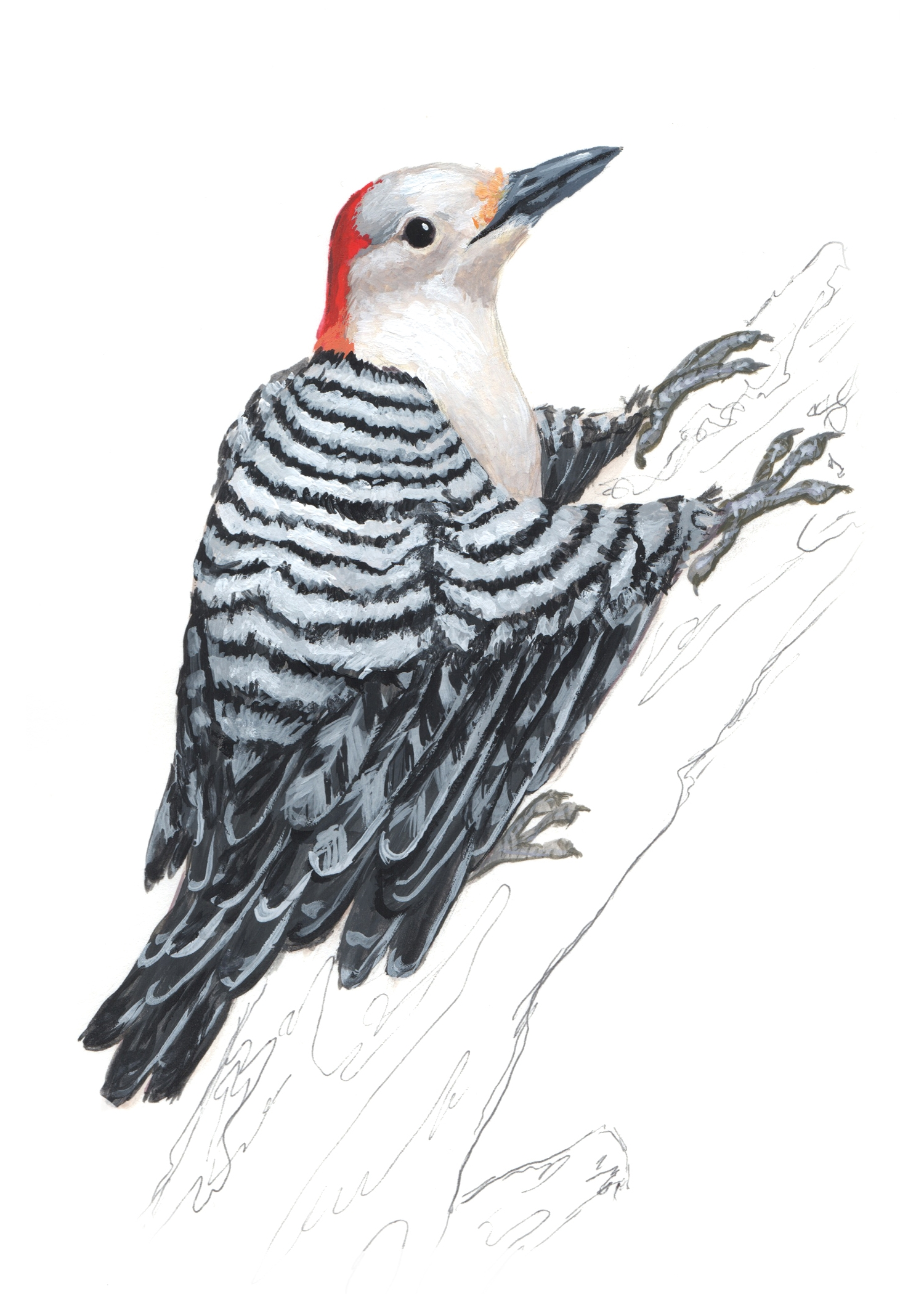 Woodpecker-Bird2.jpg
