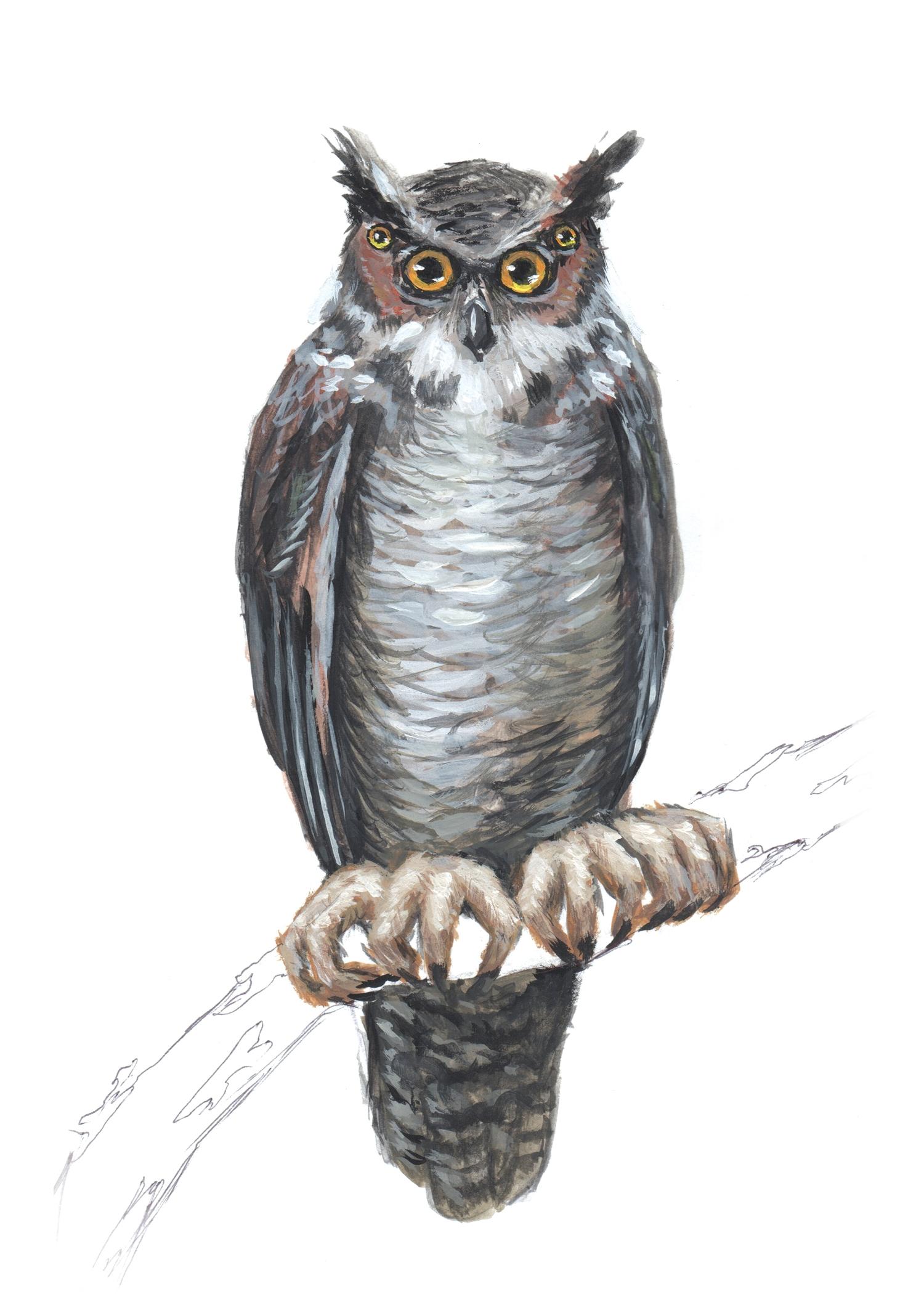 Owl-Bird3.jpg