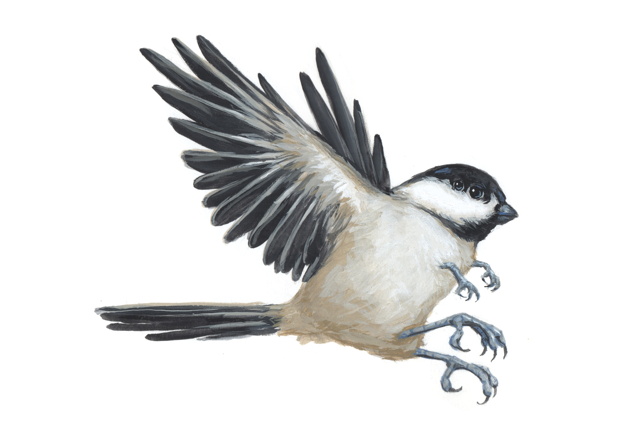 Chickadee-Bird5.jpg