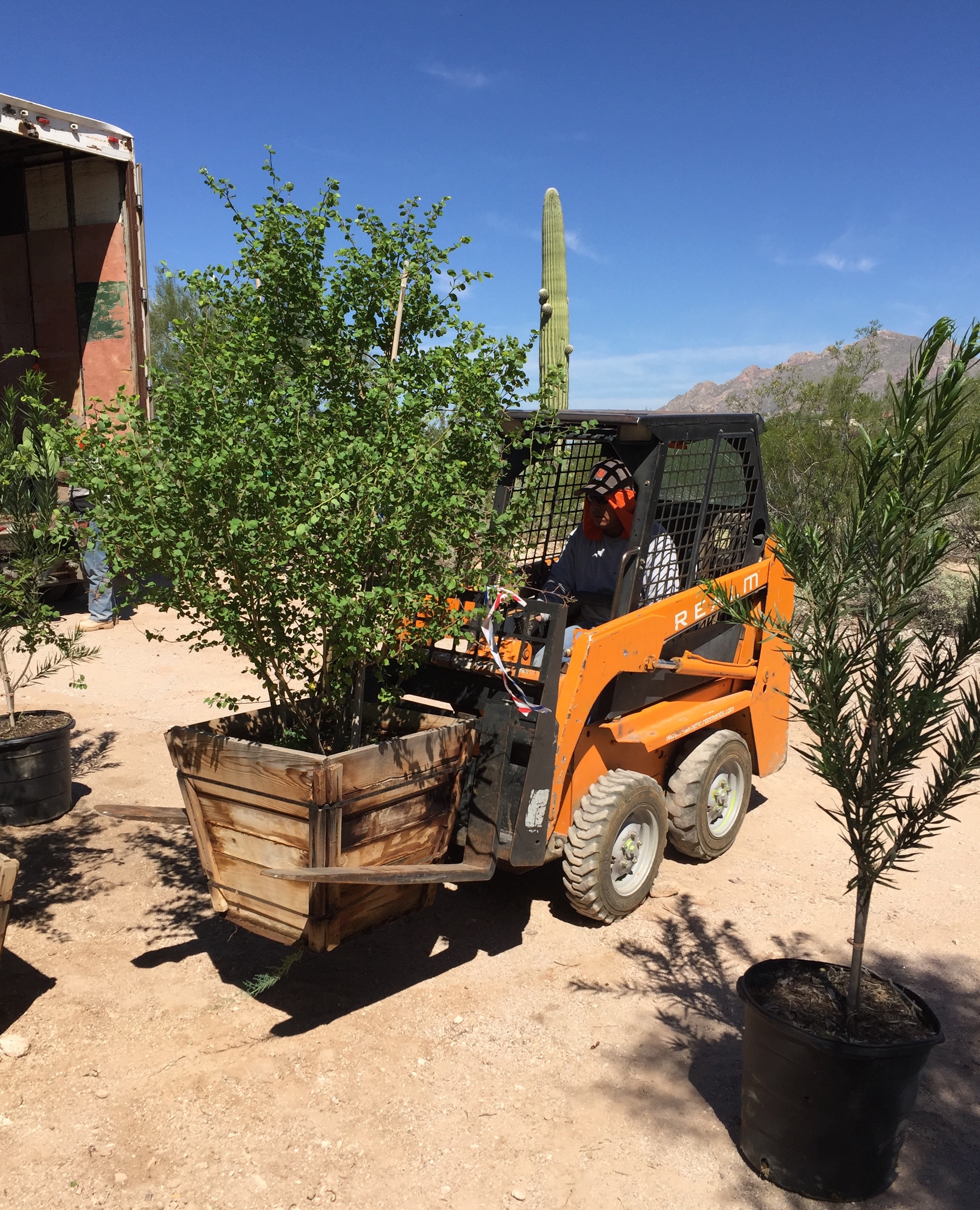 Carefully placing plants that just arrived on site