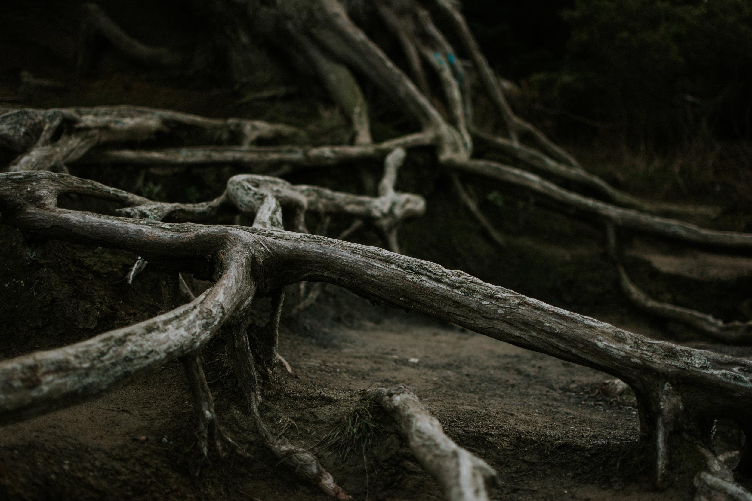 san-francisco-travel-photographer-erika-ryan-photography-lands-end