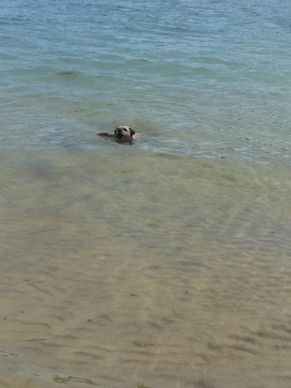 summer-swim.jpg