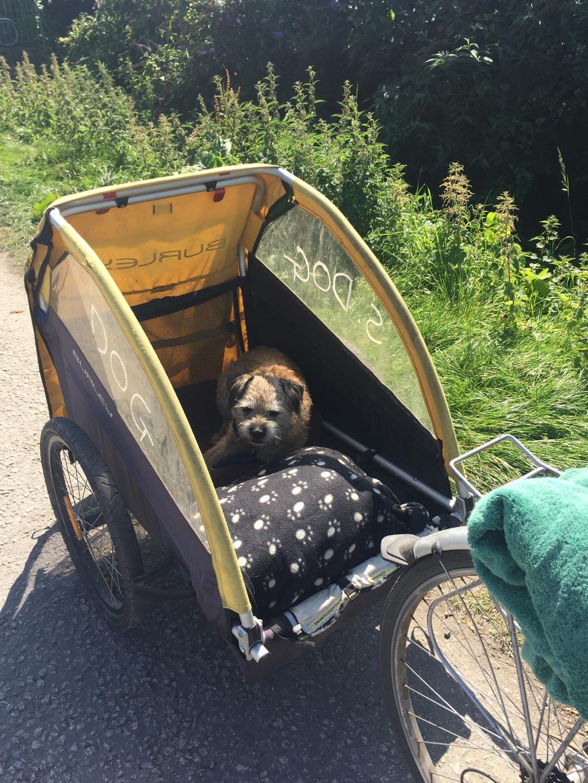 shopdog-bikeroad.jpg