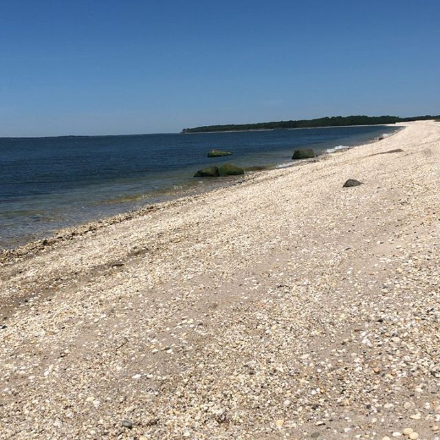 Perfect  #beachbreeze #zerohumidity #dogdayatthebeach #sochidogs #rescuedogsofinstagram
