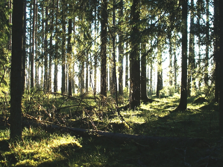 Forest in Värmland
