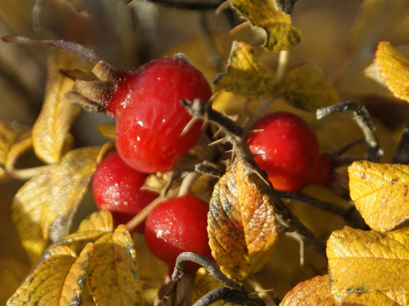 Garden colours in autumn