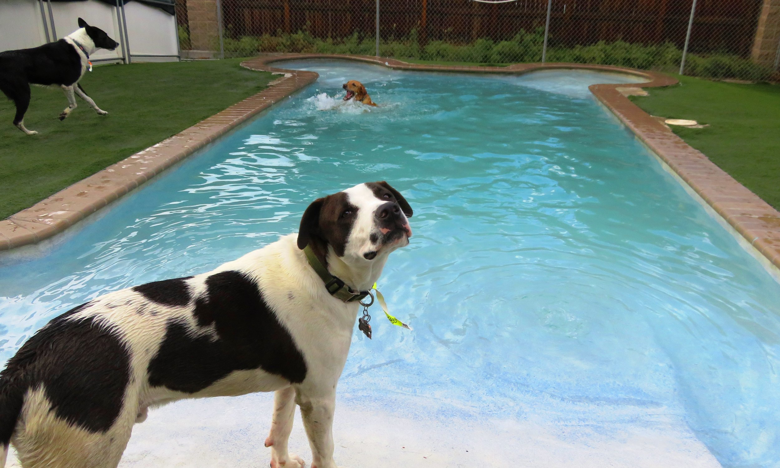 Dog Daycare Pool Time