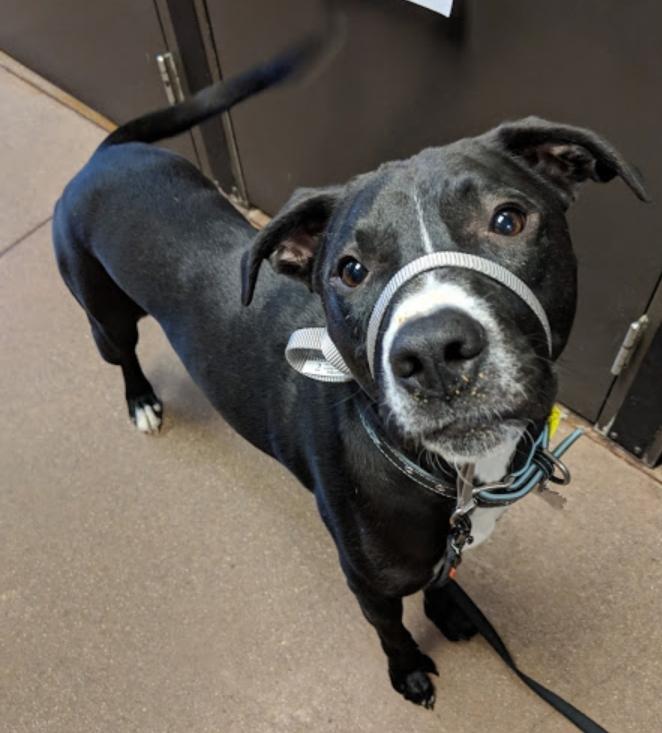 Archer Dog Training Photo