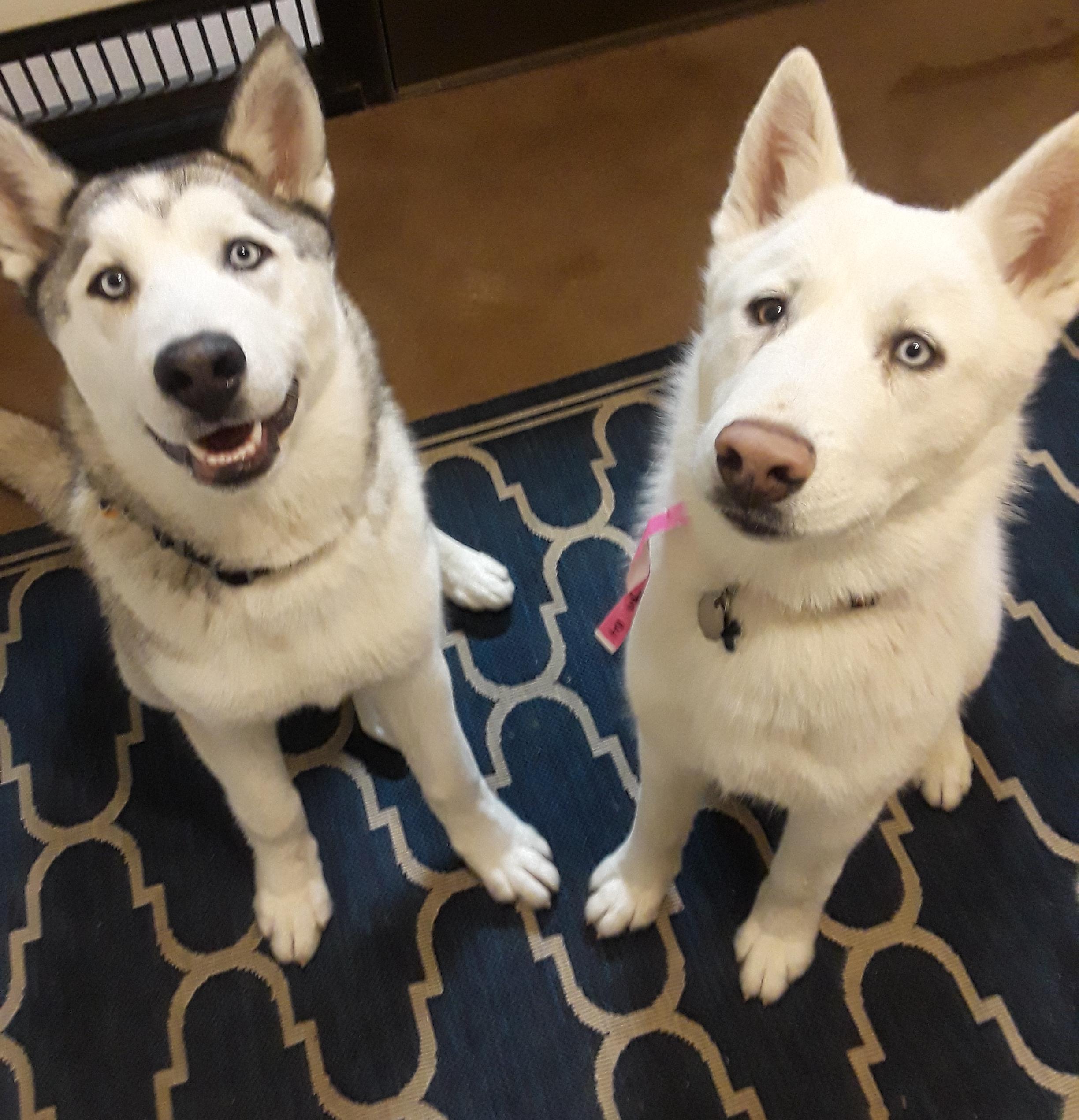 Anakin Dog Training