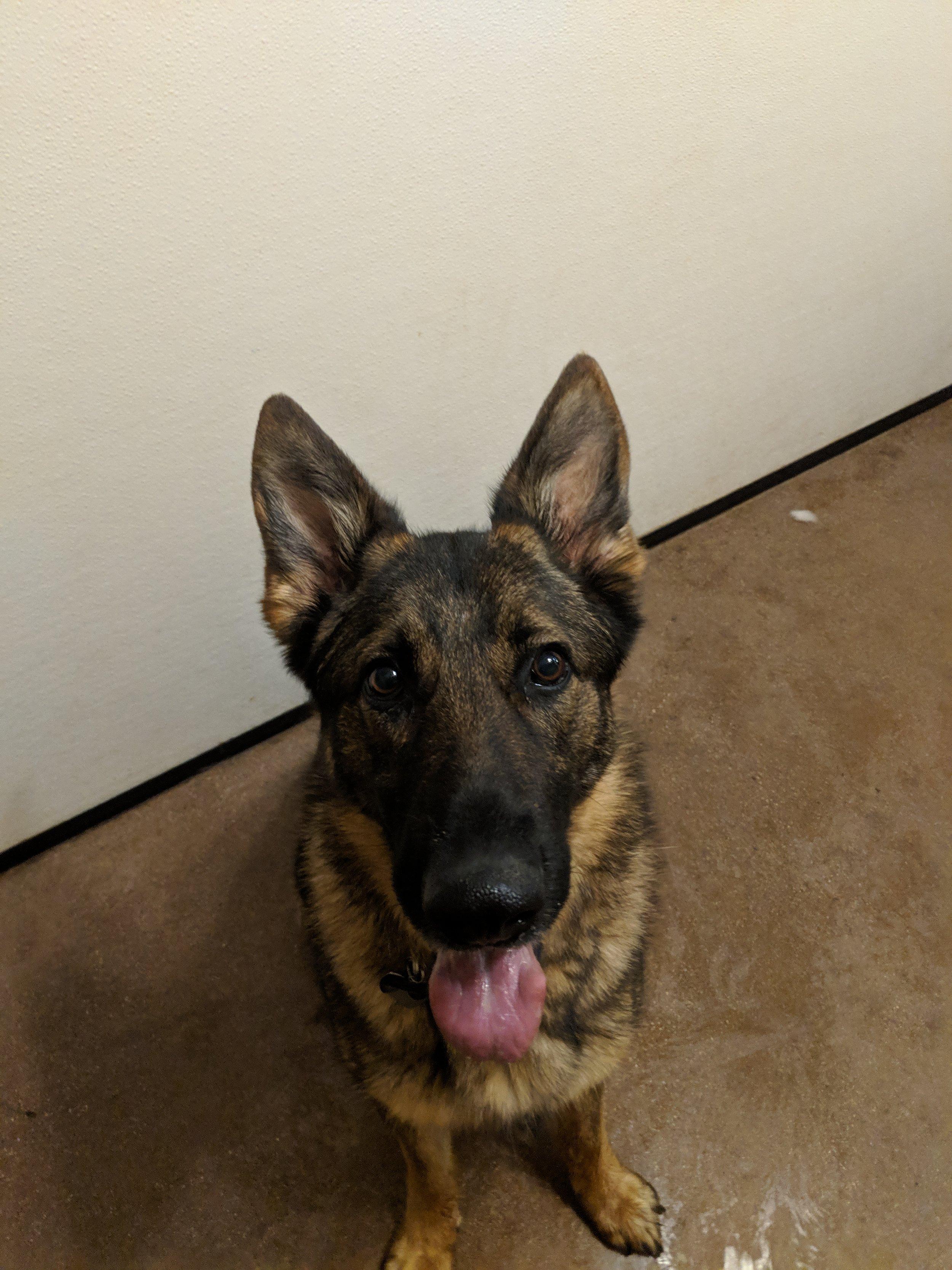 Alpha's Dog Training