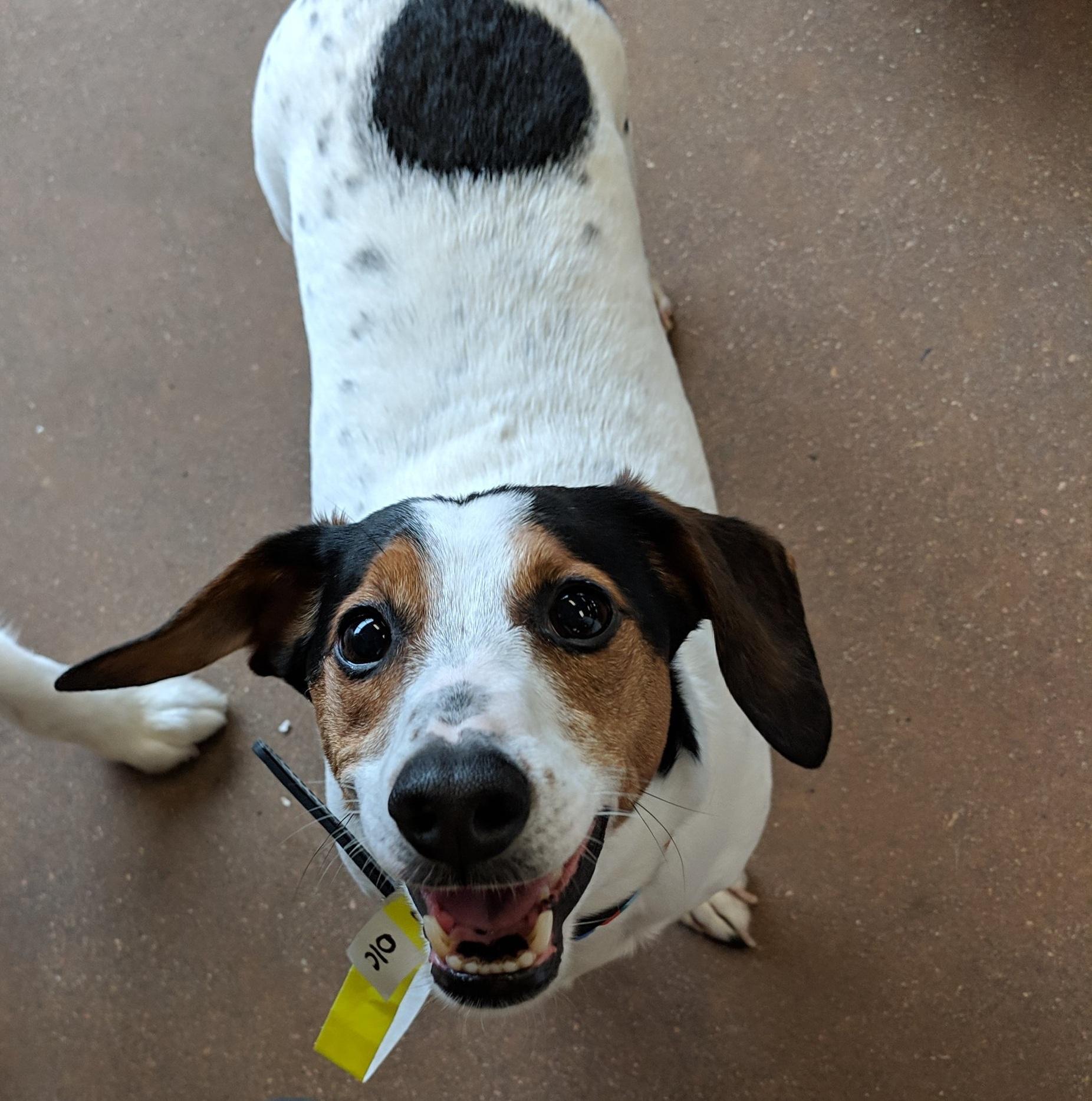 Max's Dog Training