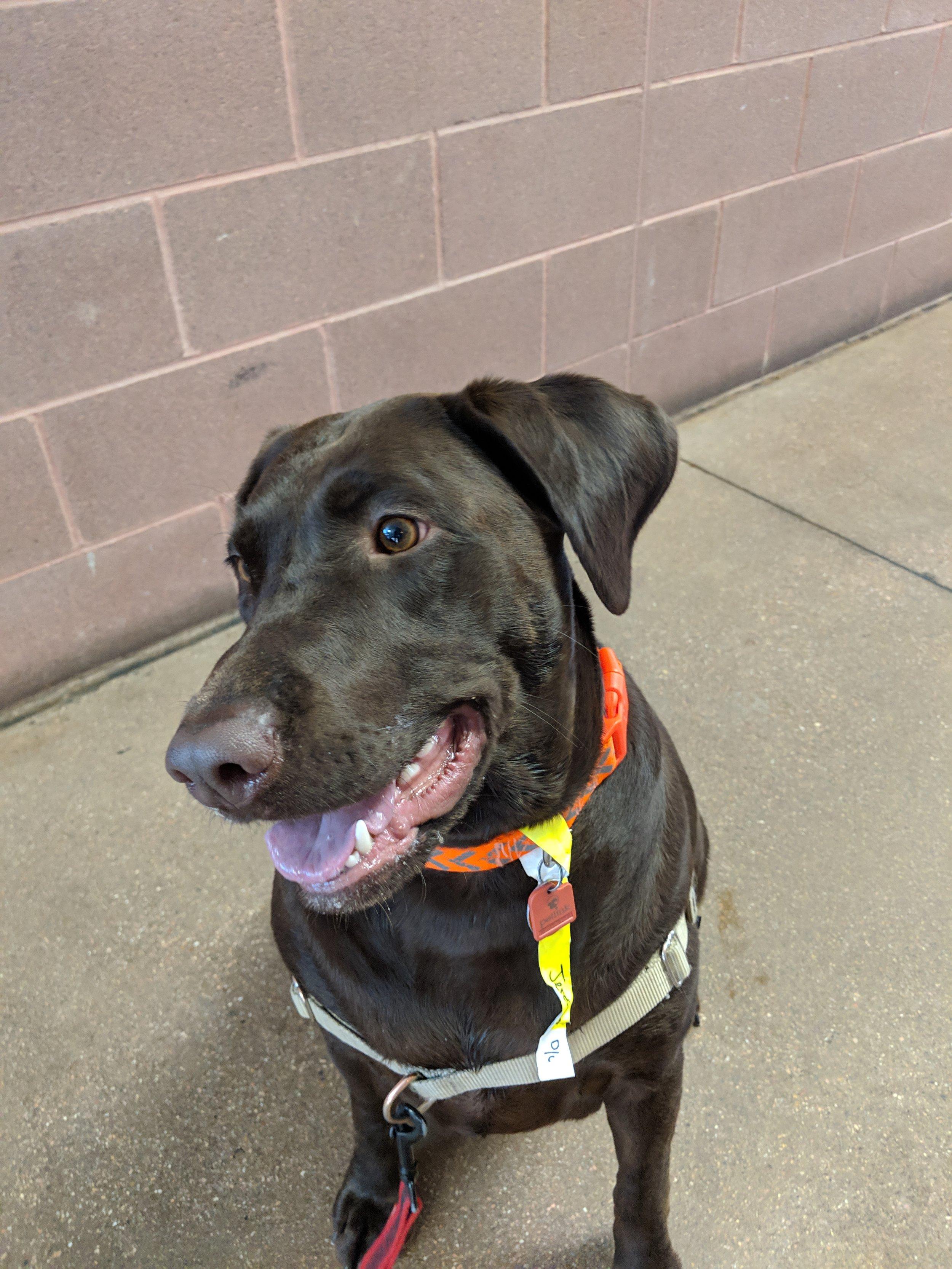 Jersey dog training