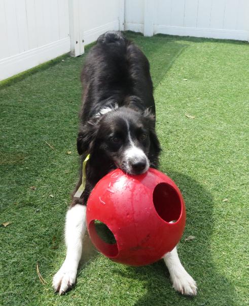 Bentley Dog Training