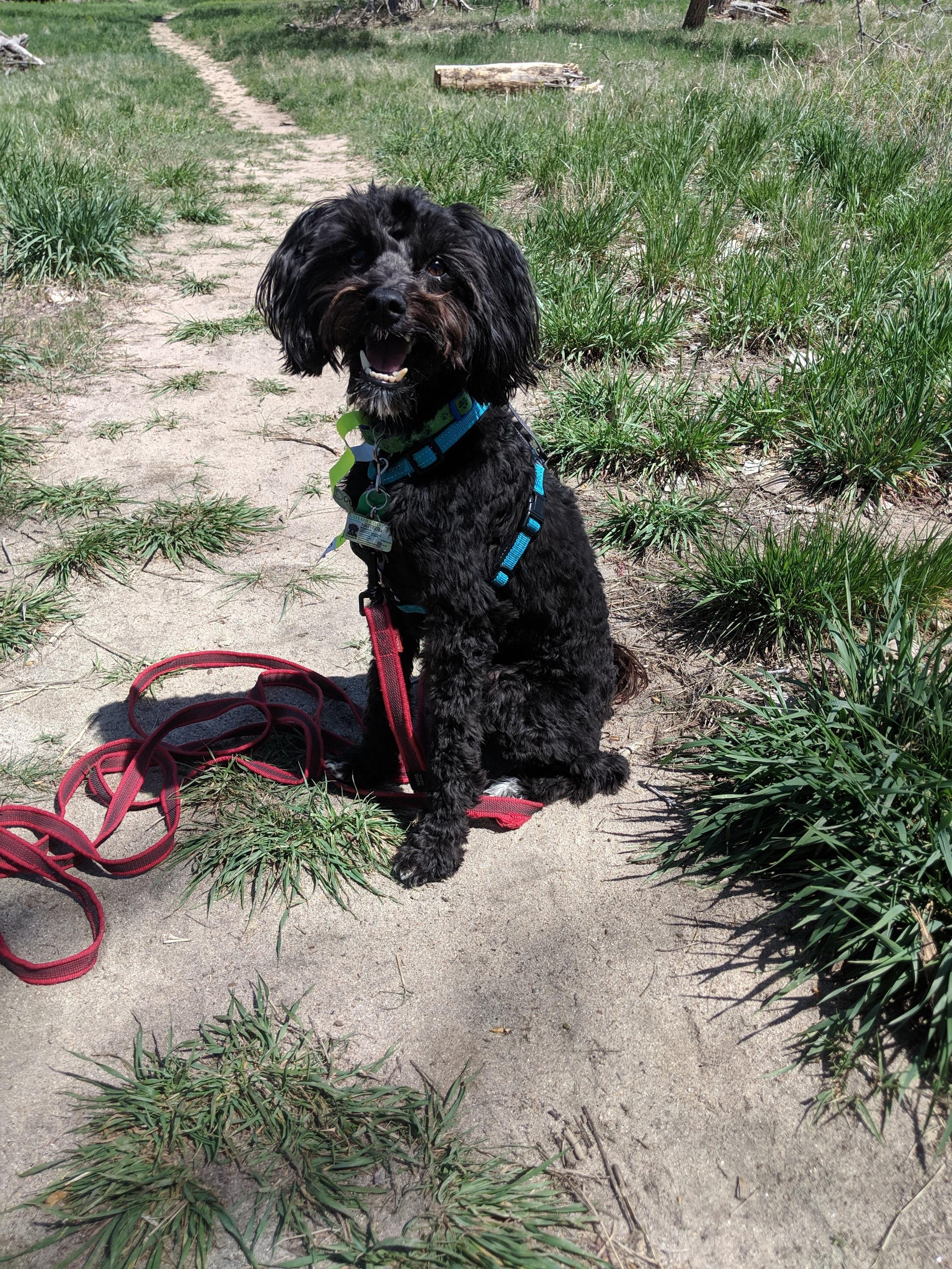Domino's Dog Training