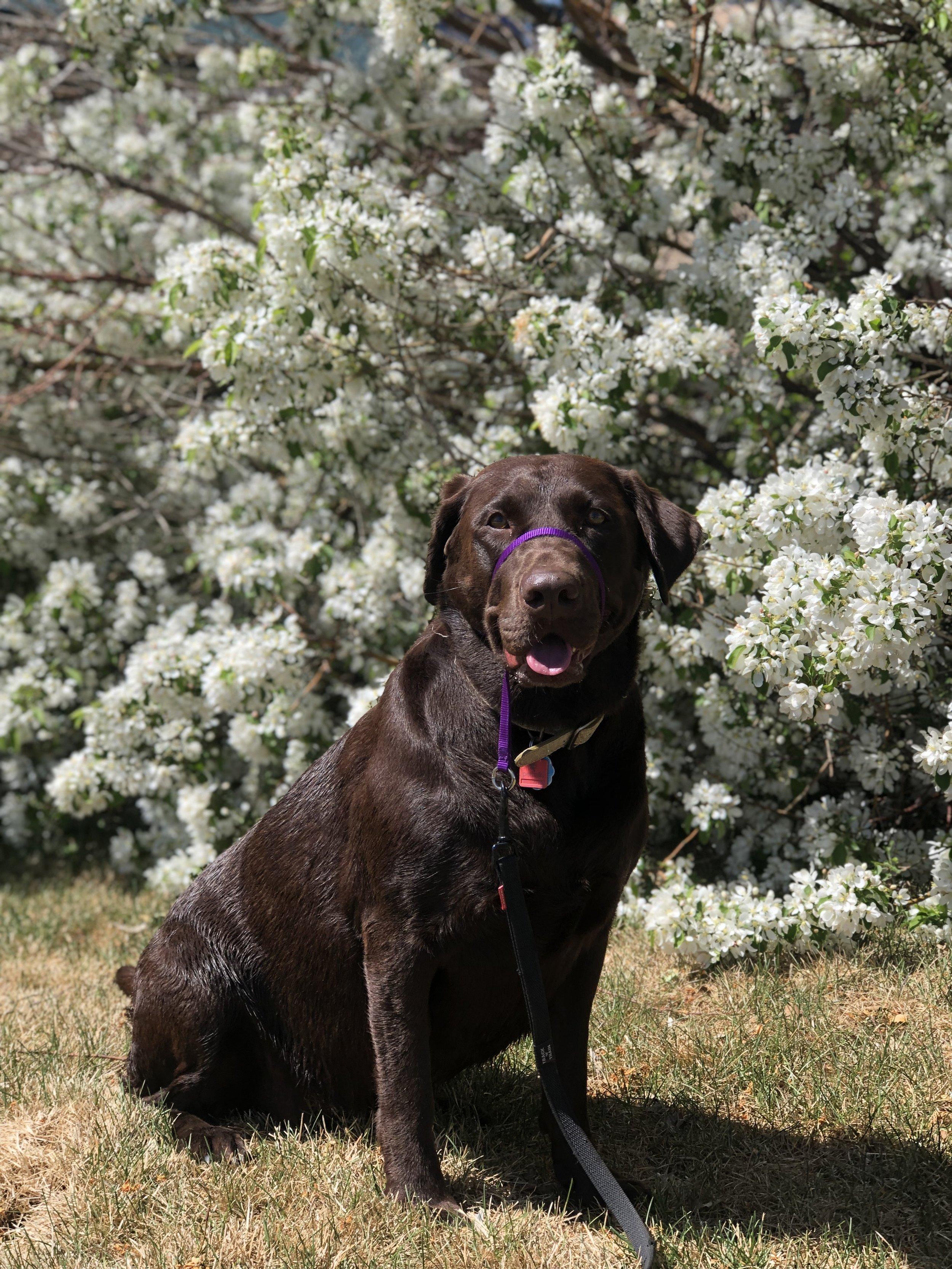 Brooklynn's Dog Training