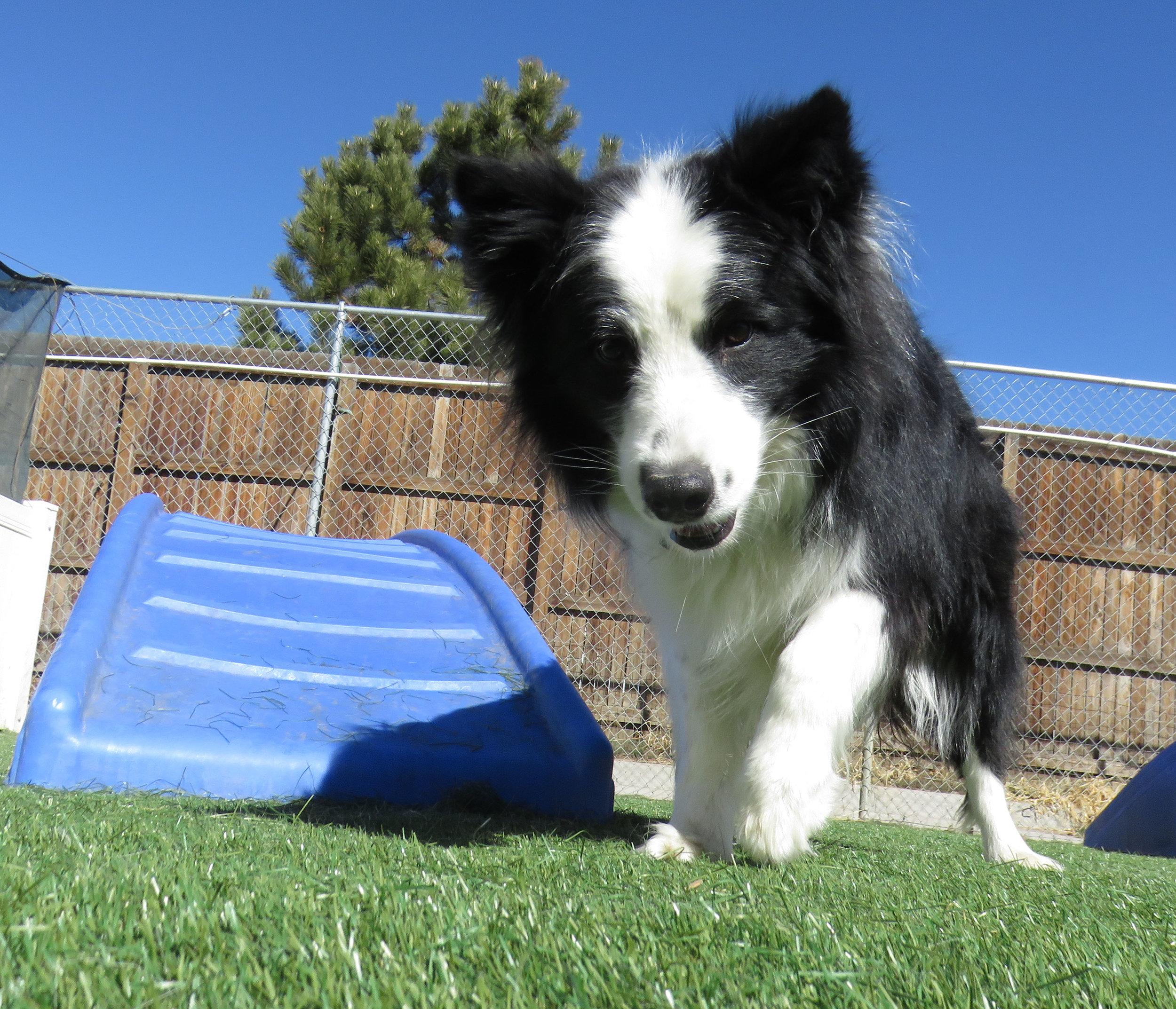 Lobo Dog Daycare