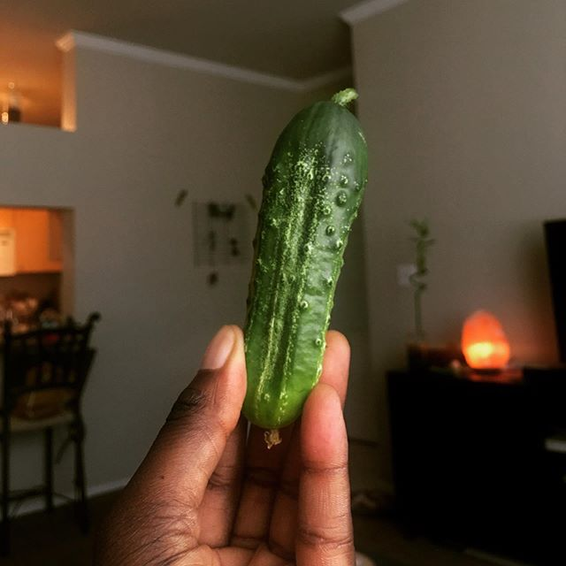 First apartment garden patio cucumber harvested! #bostonpicklingcucumber