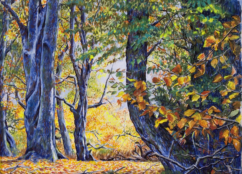 Autumn in Ashridge Forest