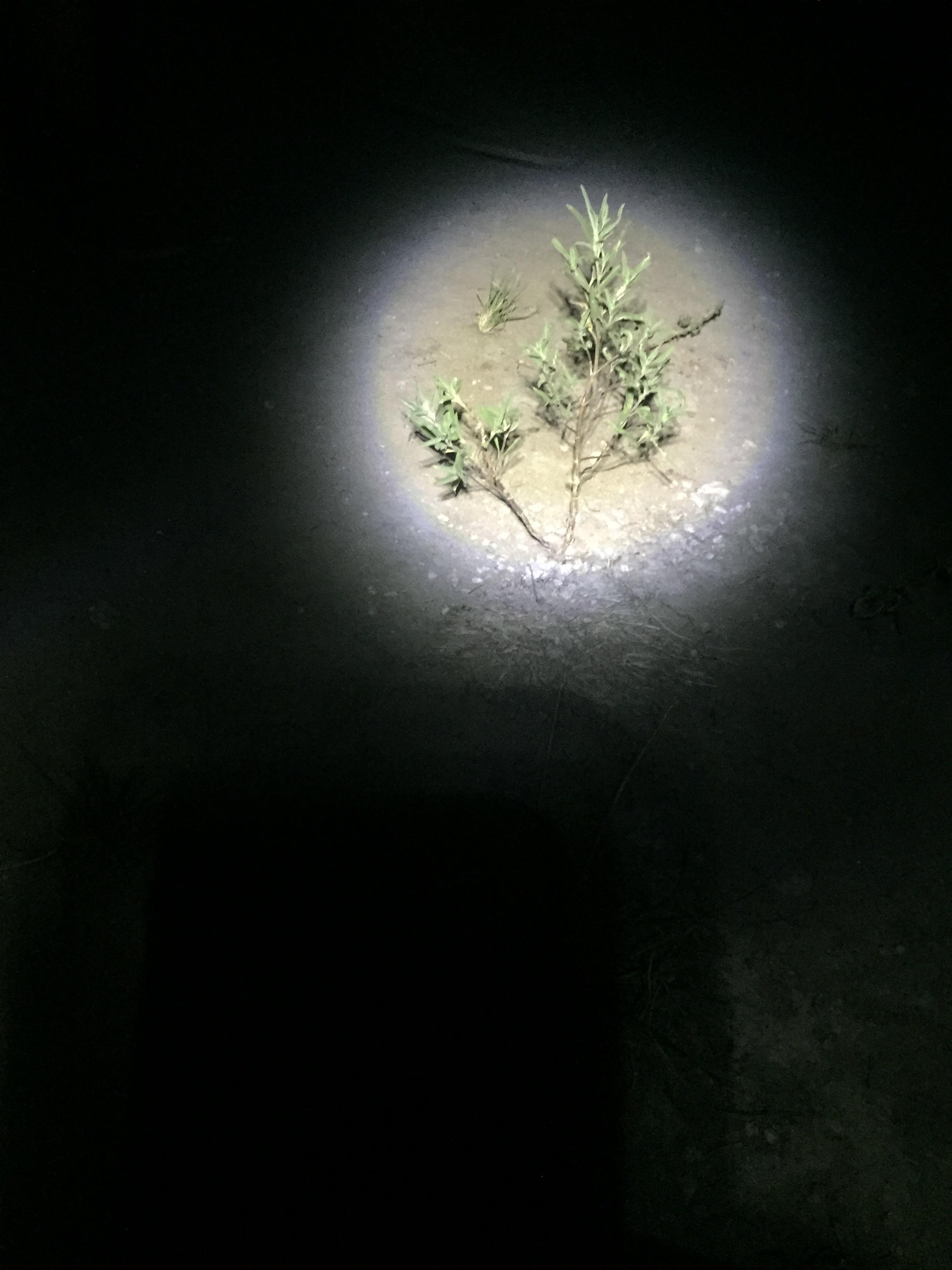 Illuminated shrub.