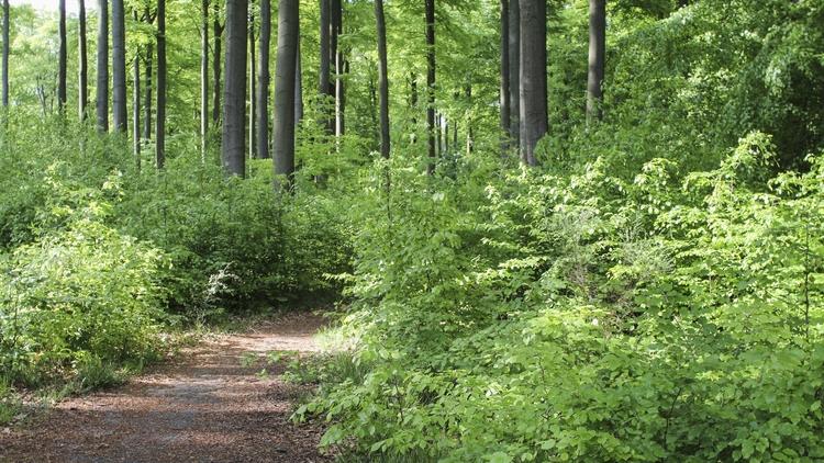 SILVA - Forêt de Soignes