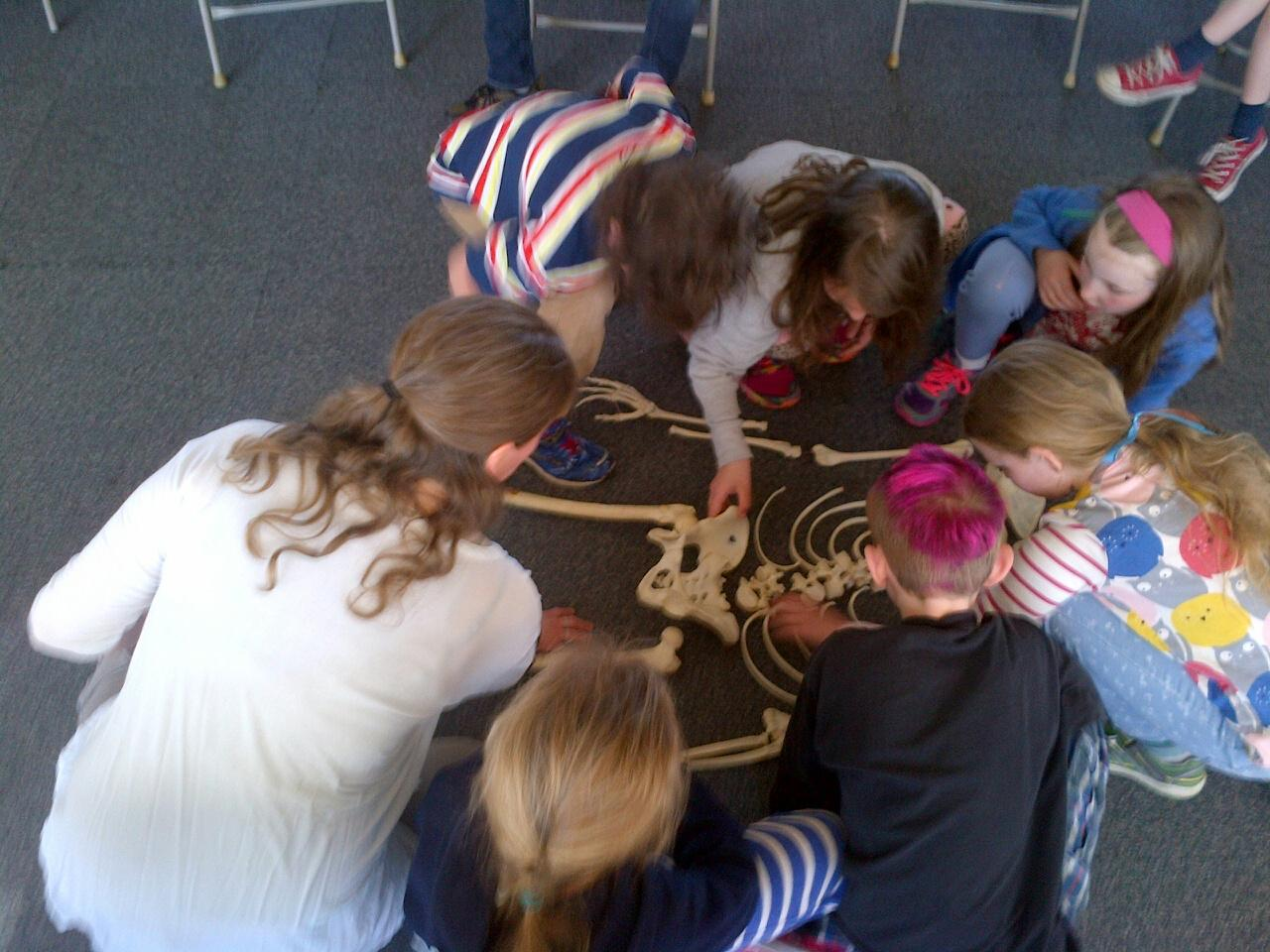 bone workshop at cold spring school.jpg