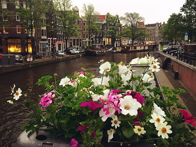 Although it might not seem like it but Spring is wrapping up and it's almost Summer in Amsterdam again..budding Petunias are up and everything! -  #stopandsmelltheflowers #cantsmellanything #waitforit #cityromance