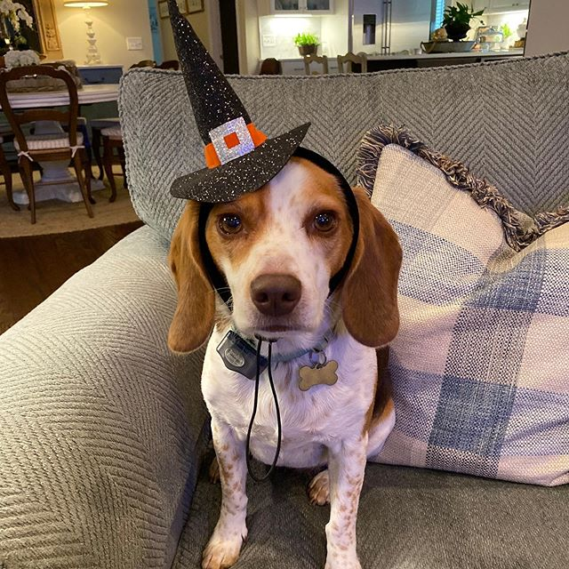 Does your pup have their Halloween costume yet?  Only a few left.  Special thanks to my niece Annie for modeling!  Open 10-6 today!