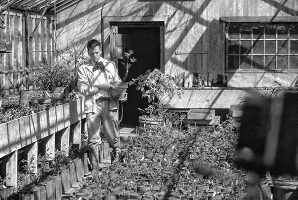 William GrATWICK iii working with the tree peonies, c. 1940