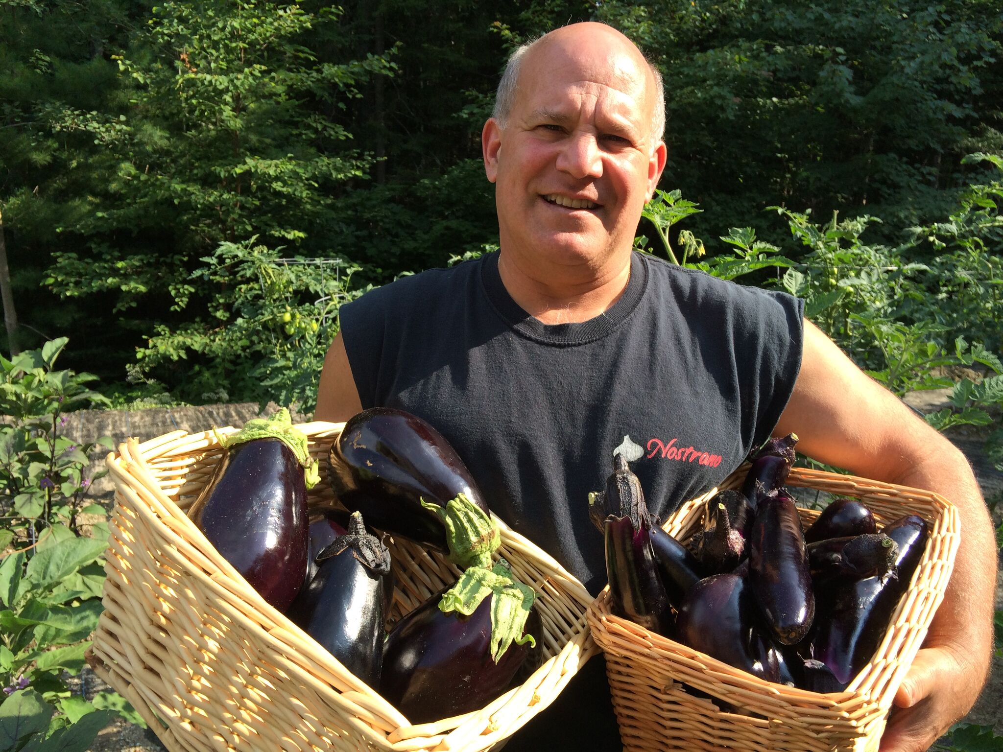 Chef Frank Pendola, harvesting organic eggplants from his own garden on their property.