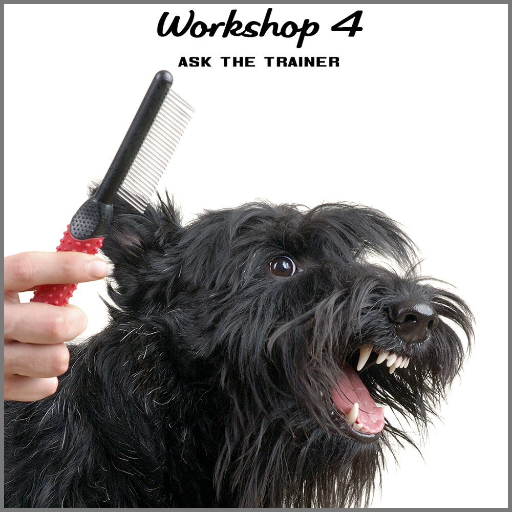 workshop 4 shortcut.jpg
