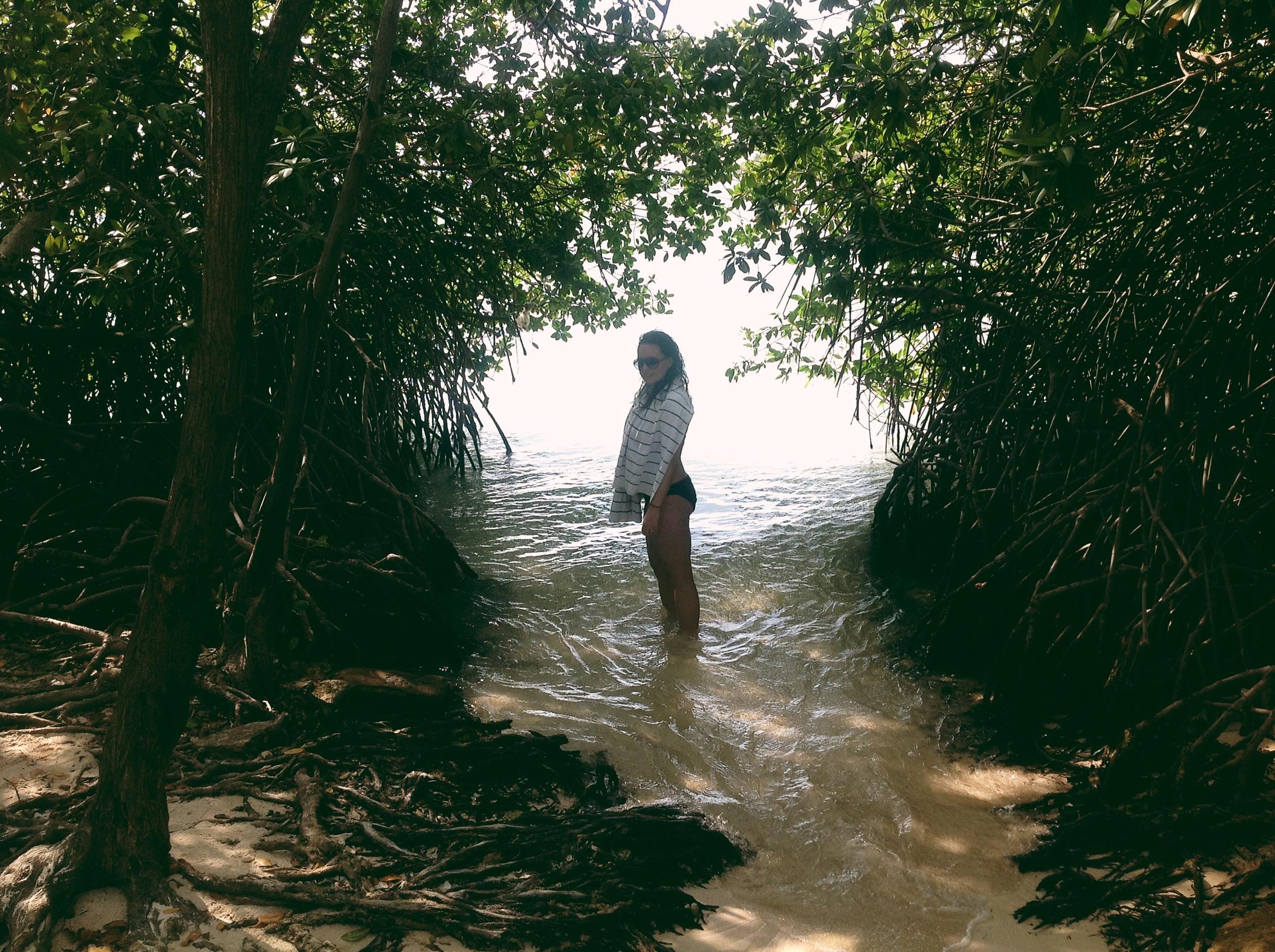 The mangroves of Mangel Halto