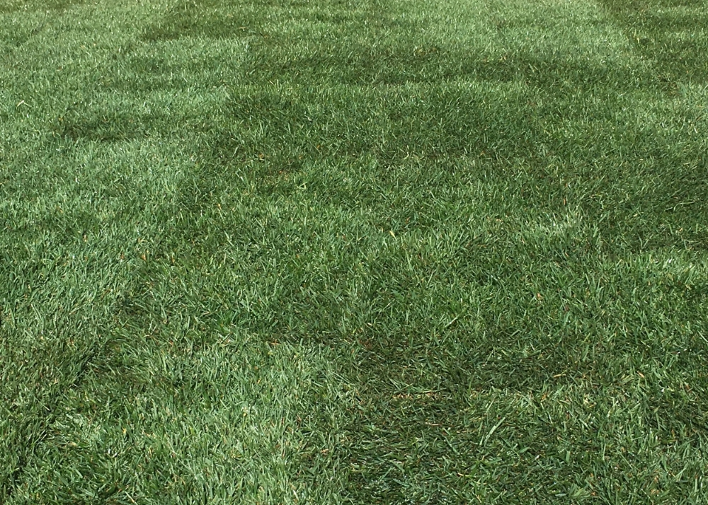 Mow turf area, Line trim around obstacles, Edge property, Power blow hard surfaces, Aeration, Fertilizer.