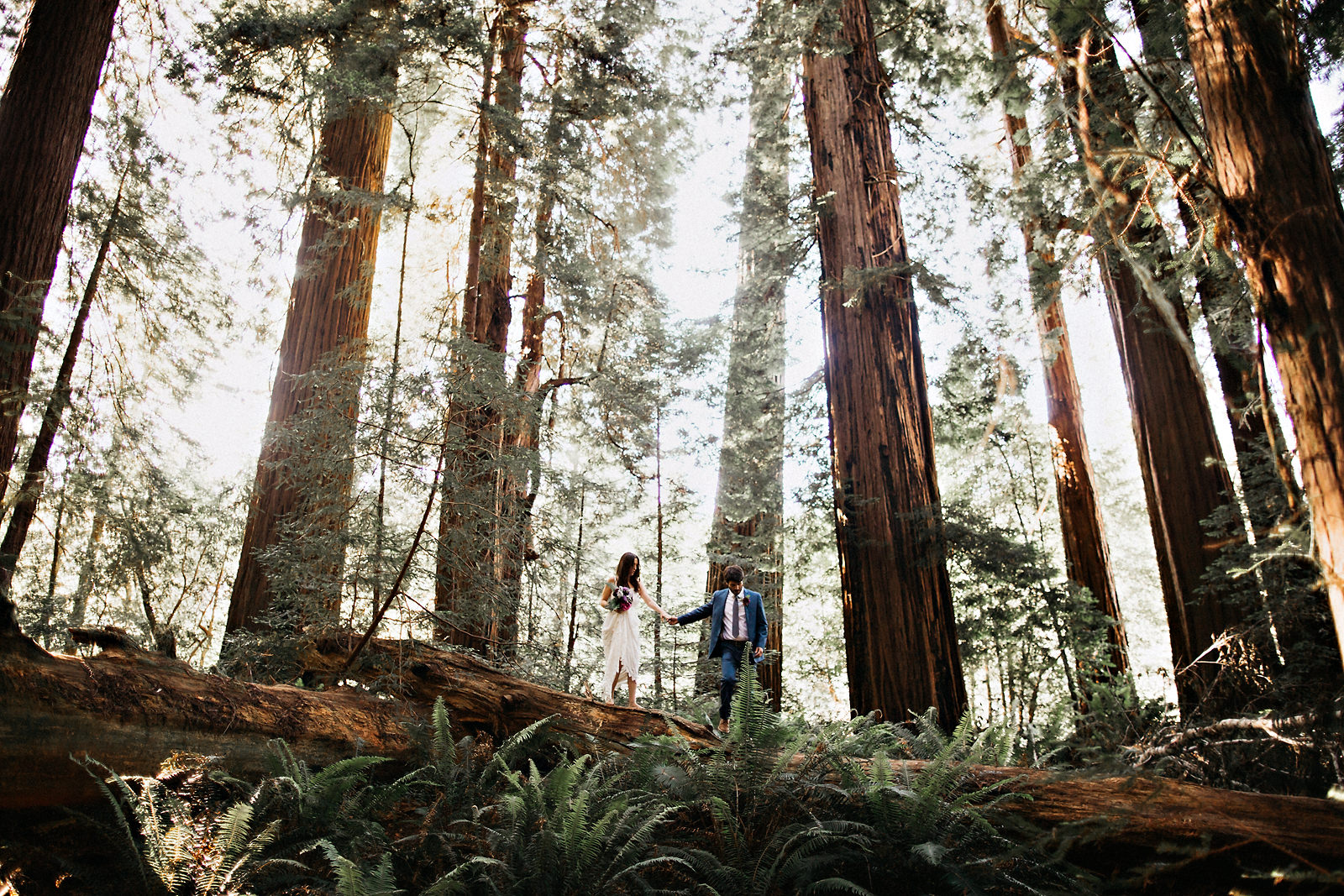 beautiful-redwoods-elopement